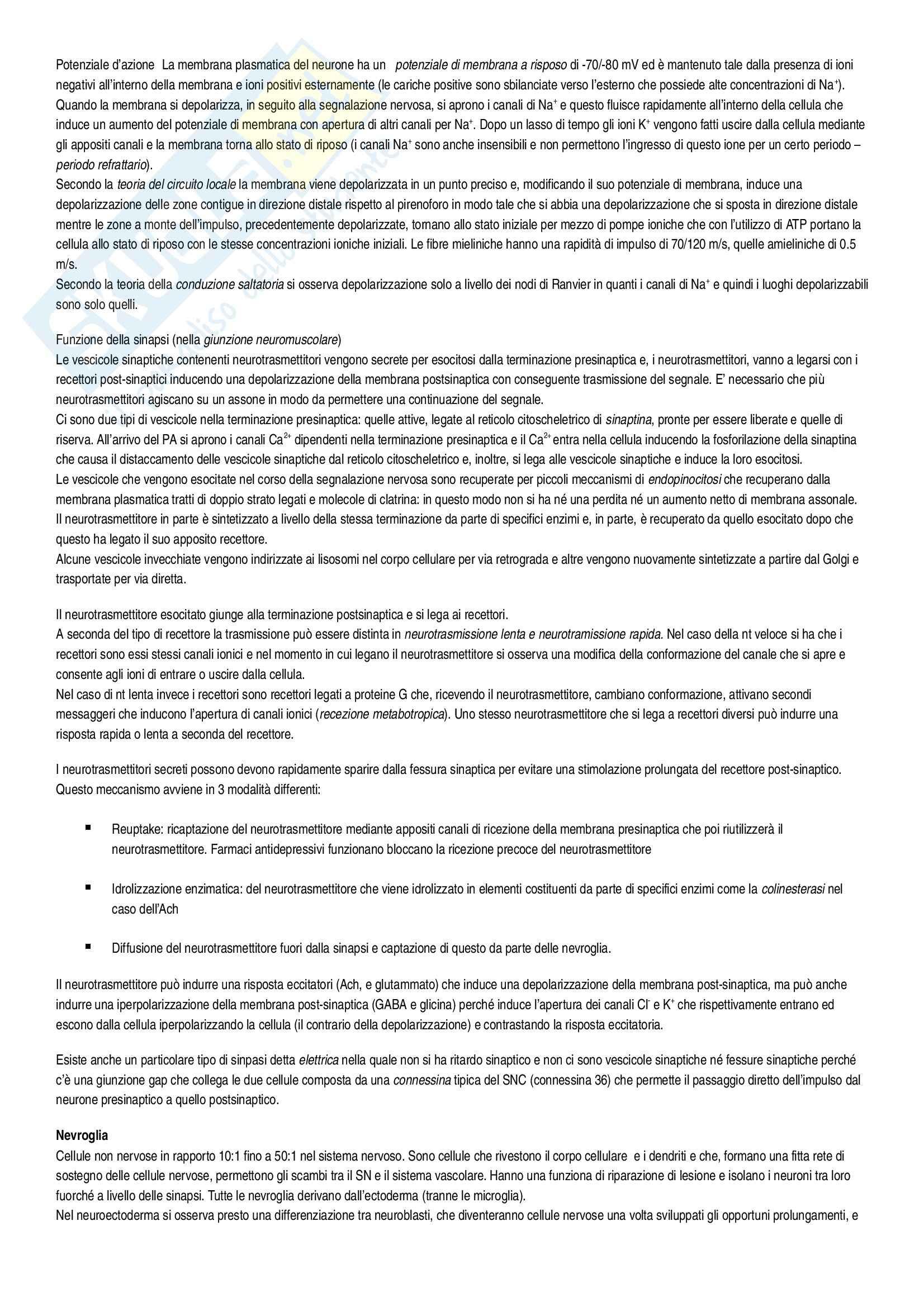 Riassunto esame Istologia, Istologia Monesi, prof. Canipari Pag. 36