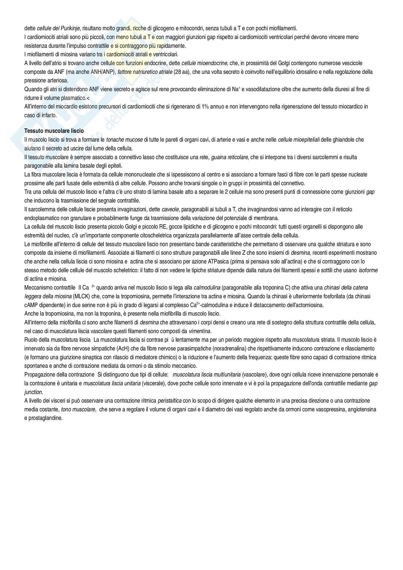 Riassunto esame Istologia, Istologia Monesi, prof. Canipari Pag. 41