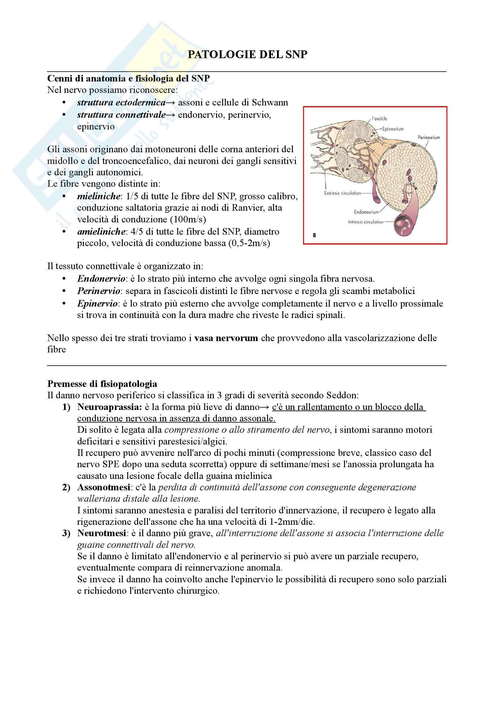 Patologie del Sistema Nervoso Periferico: Polineuropatie, Neurologia