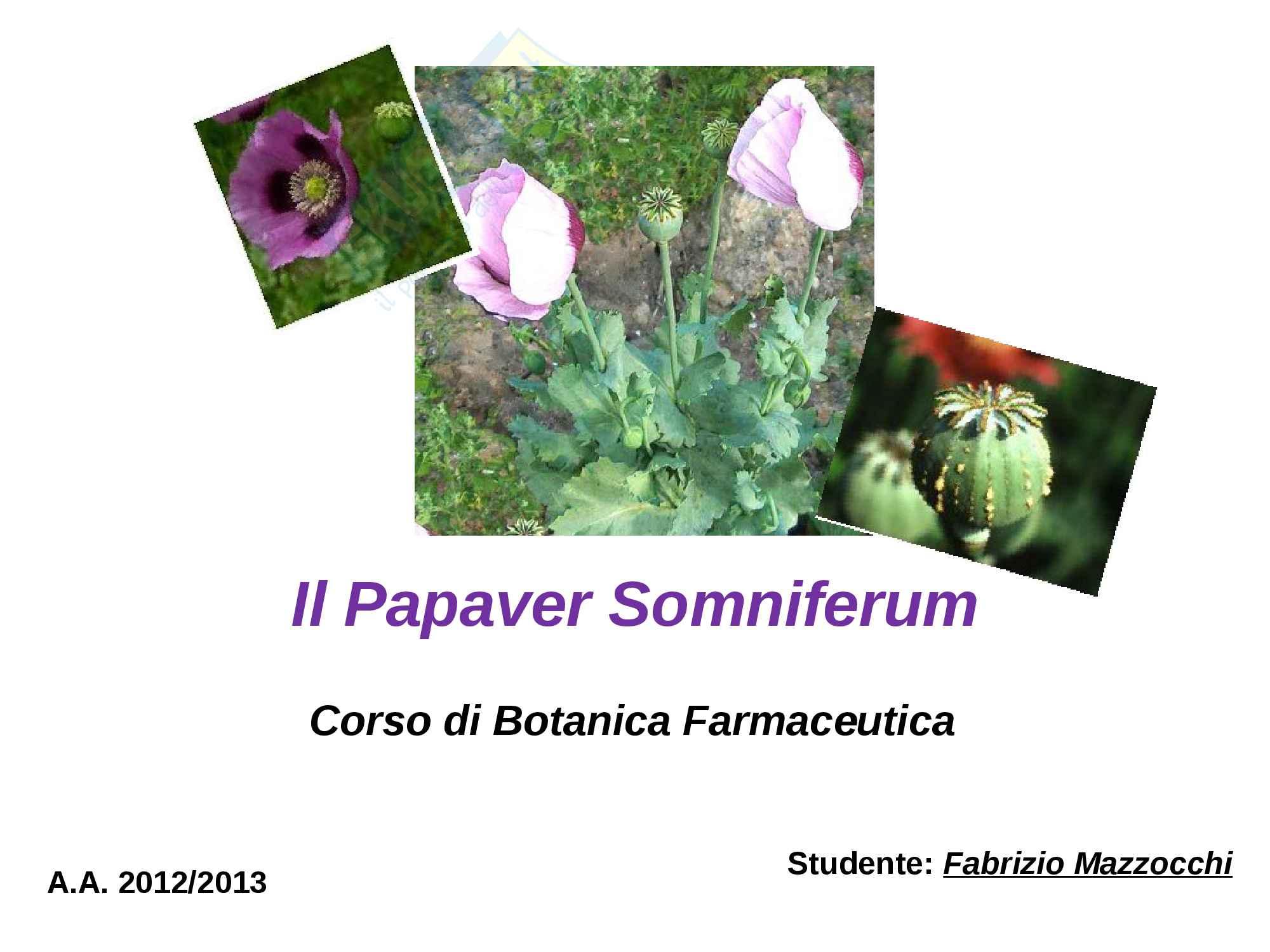 Tesina di Botanica Farmaceutica, prof. Serafini Mauro