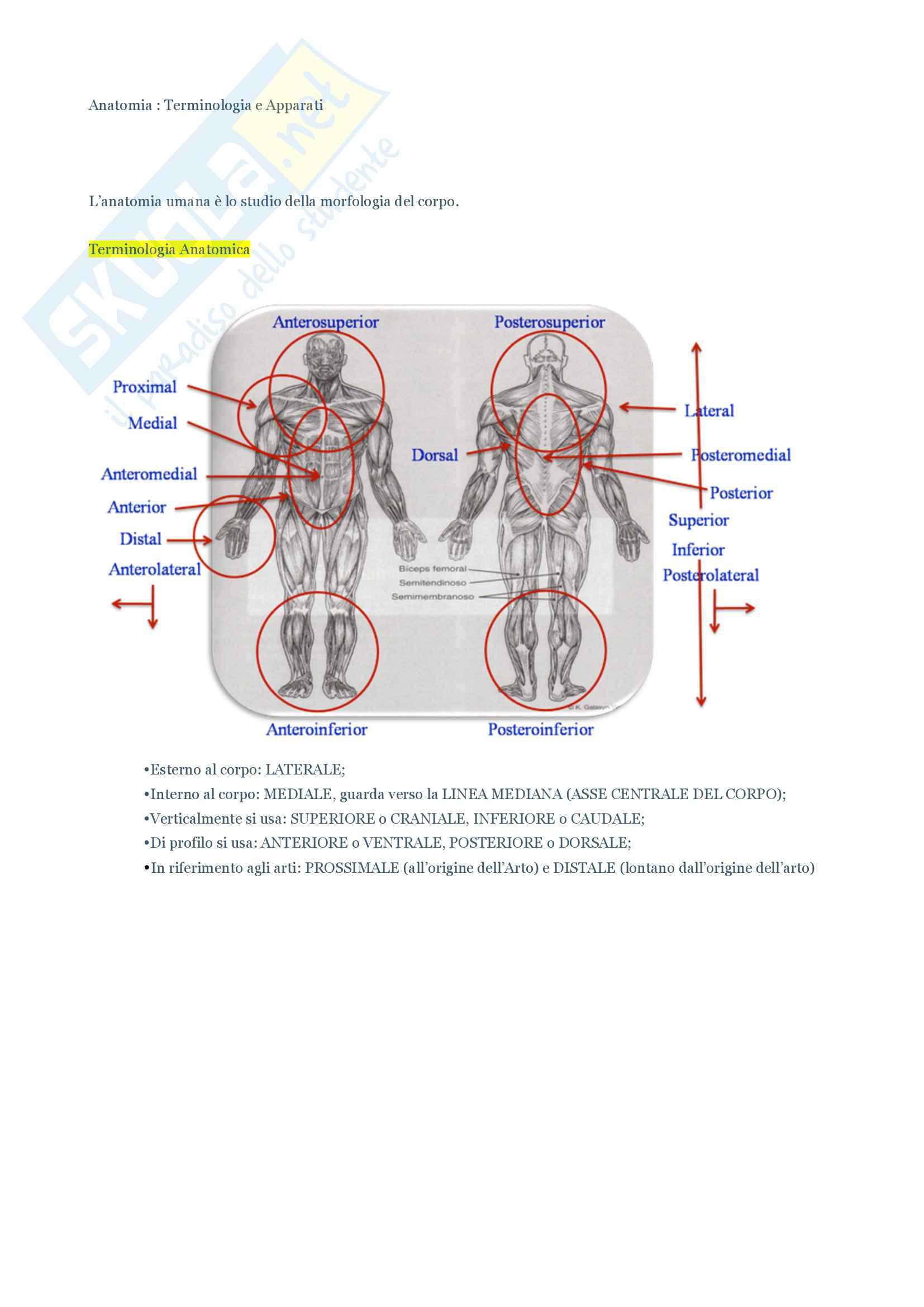 Anatomia Terminologia e Apparati