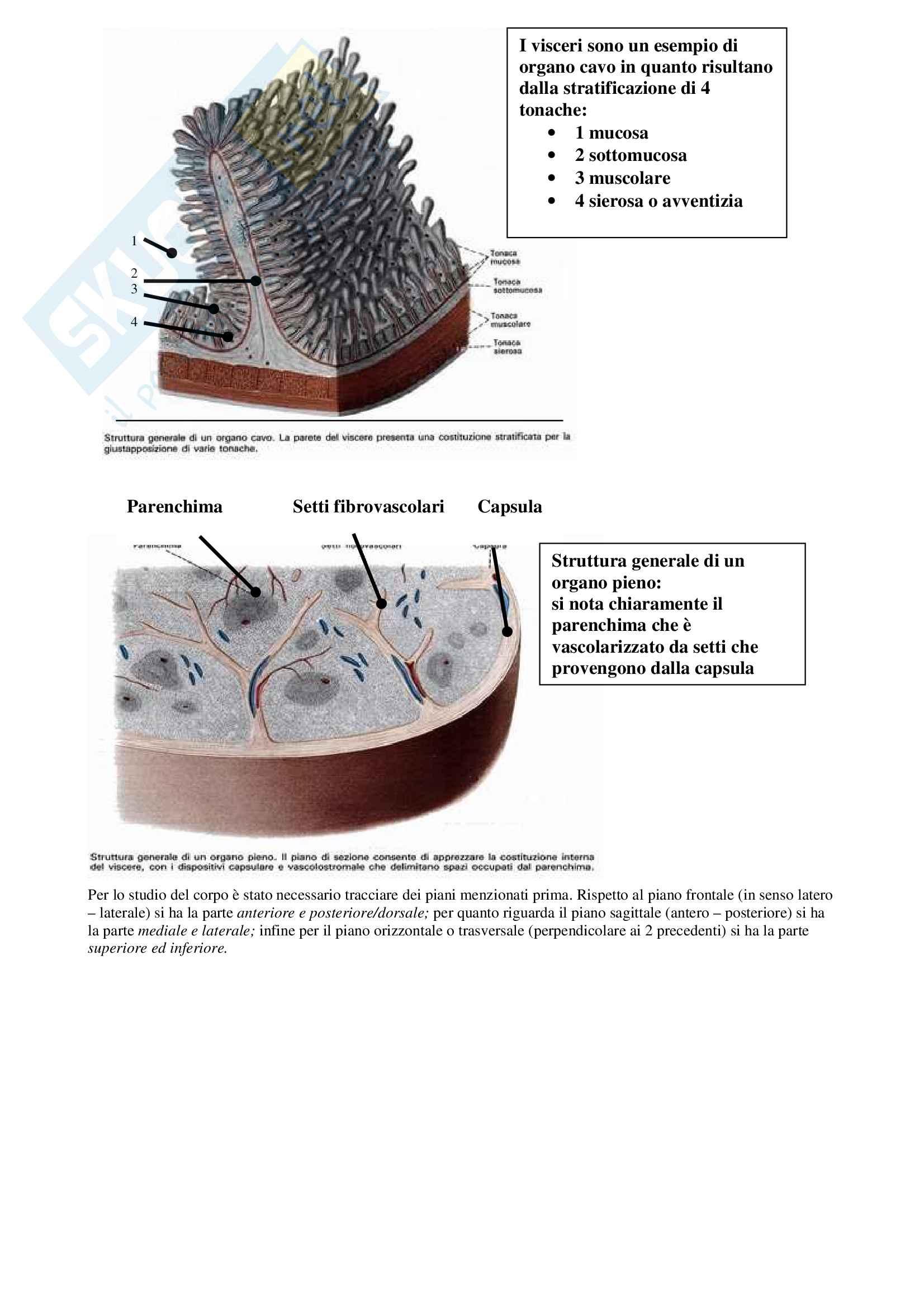 Anatomia generale Pag. 2