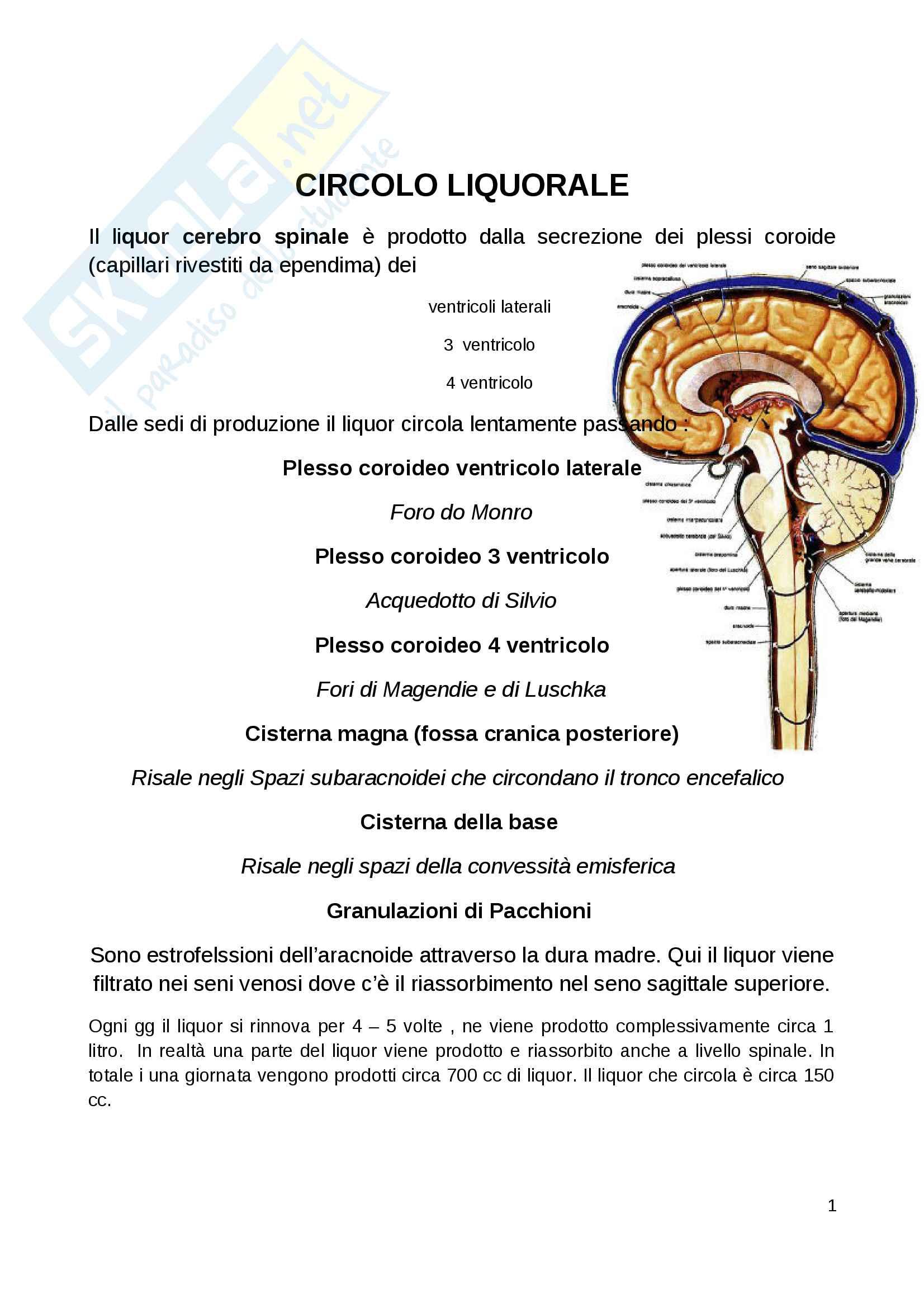 Idrocefalo