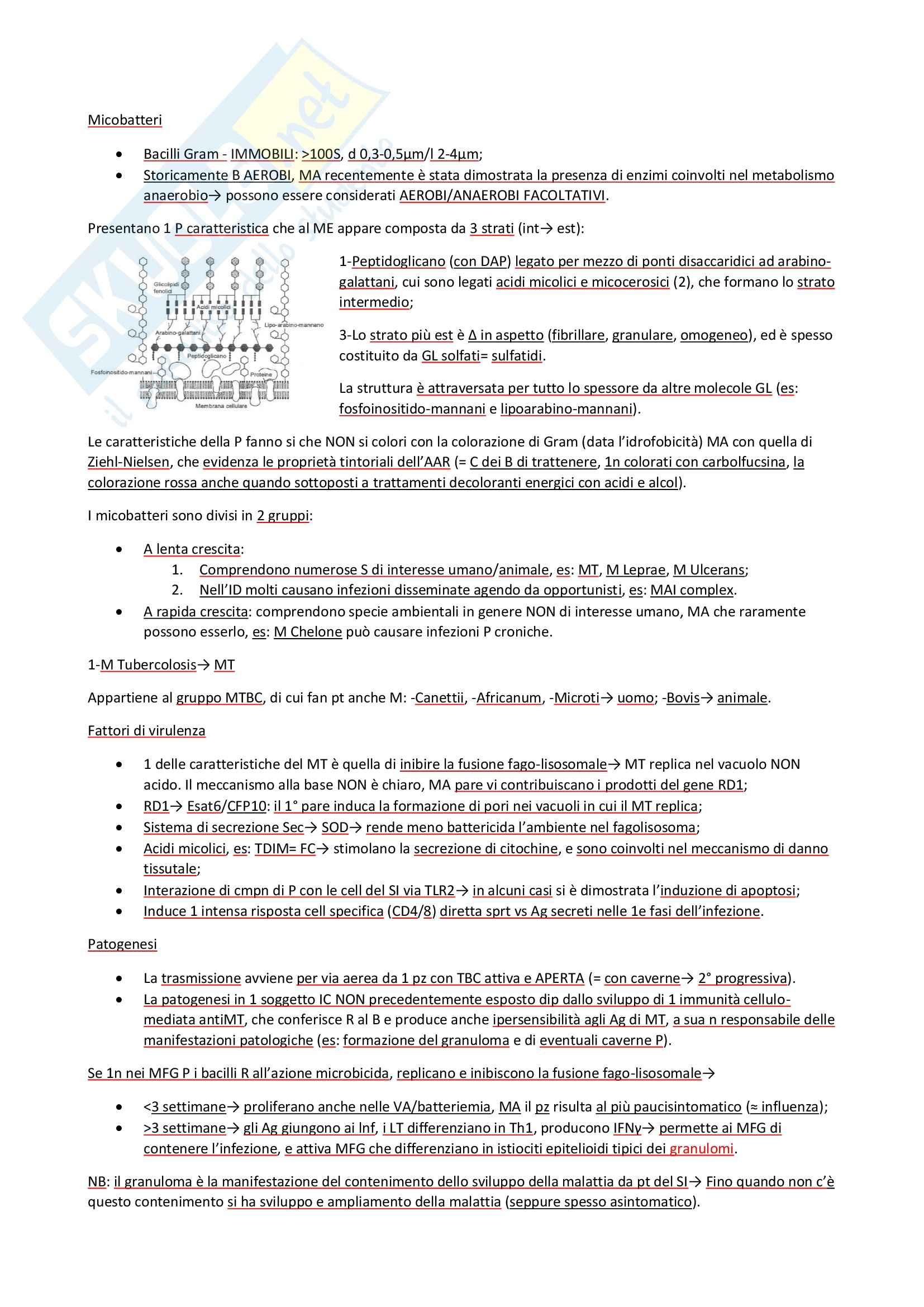 Microbiologia - Batteri Pag. 36
