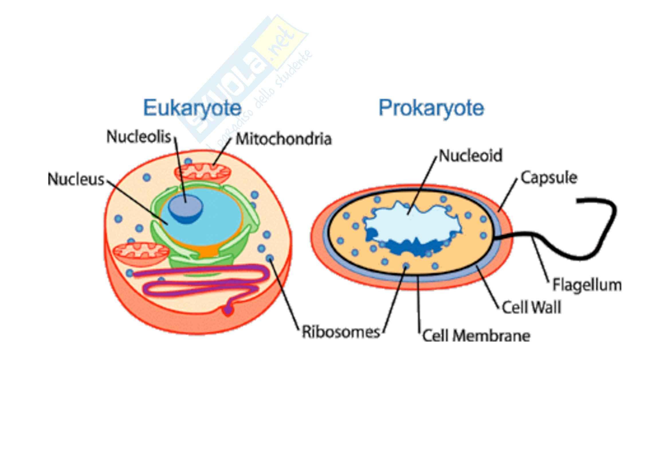 Genetica umana - cromosomi - Appunti