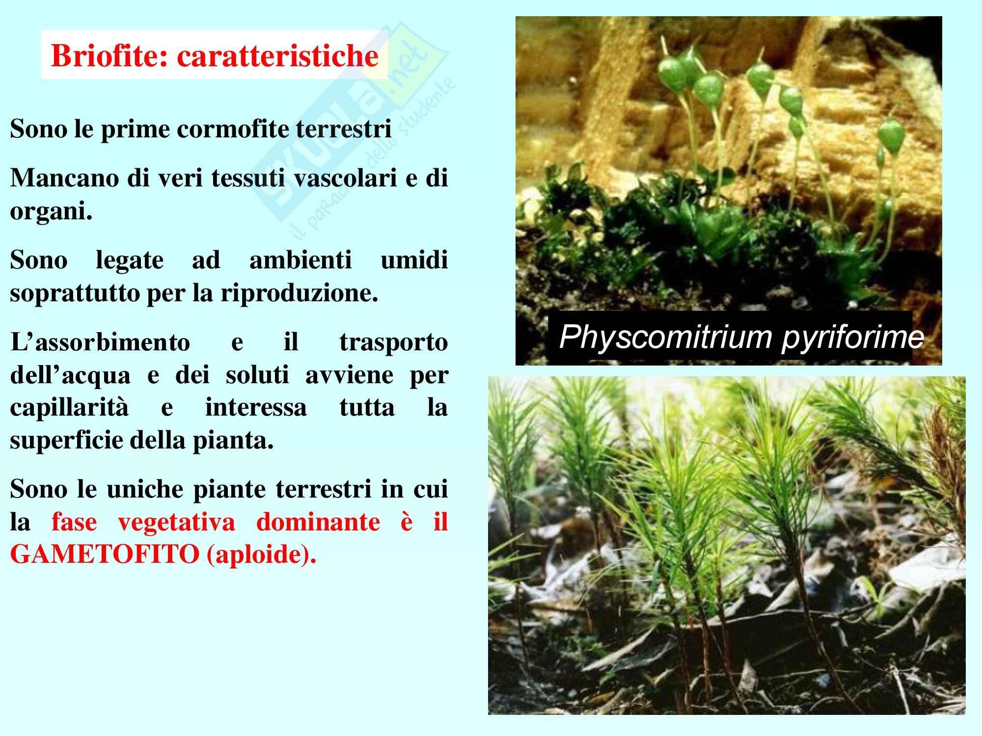 Biologia vegetale - briofite e pteridofite Pag. 6
