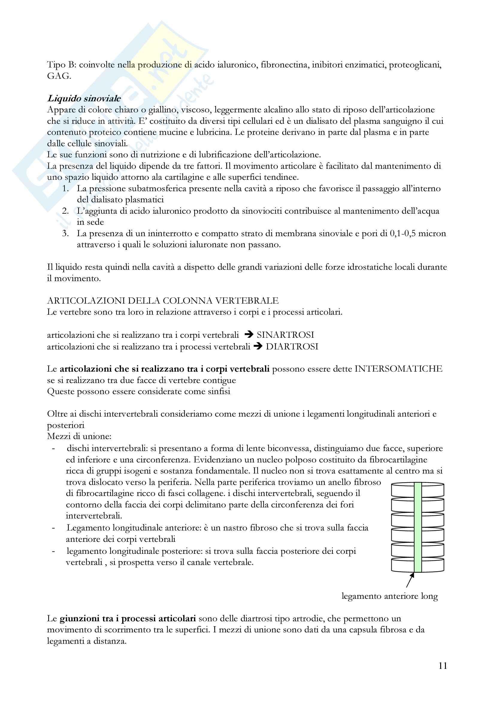Anatomia umana - apparato locomotore Pag. 11