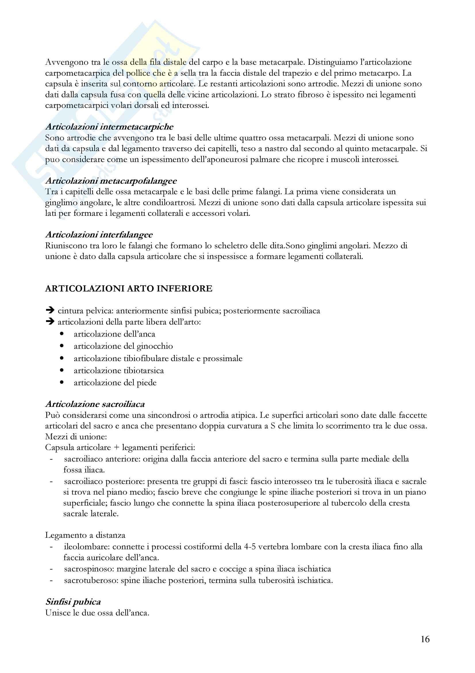 Anatomia umana - apparato locomotore Pag. 16