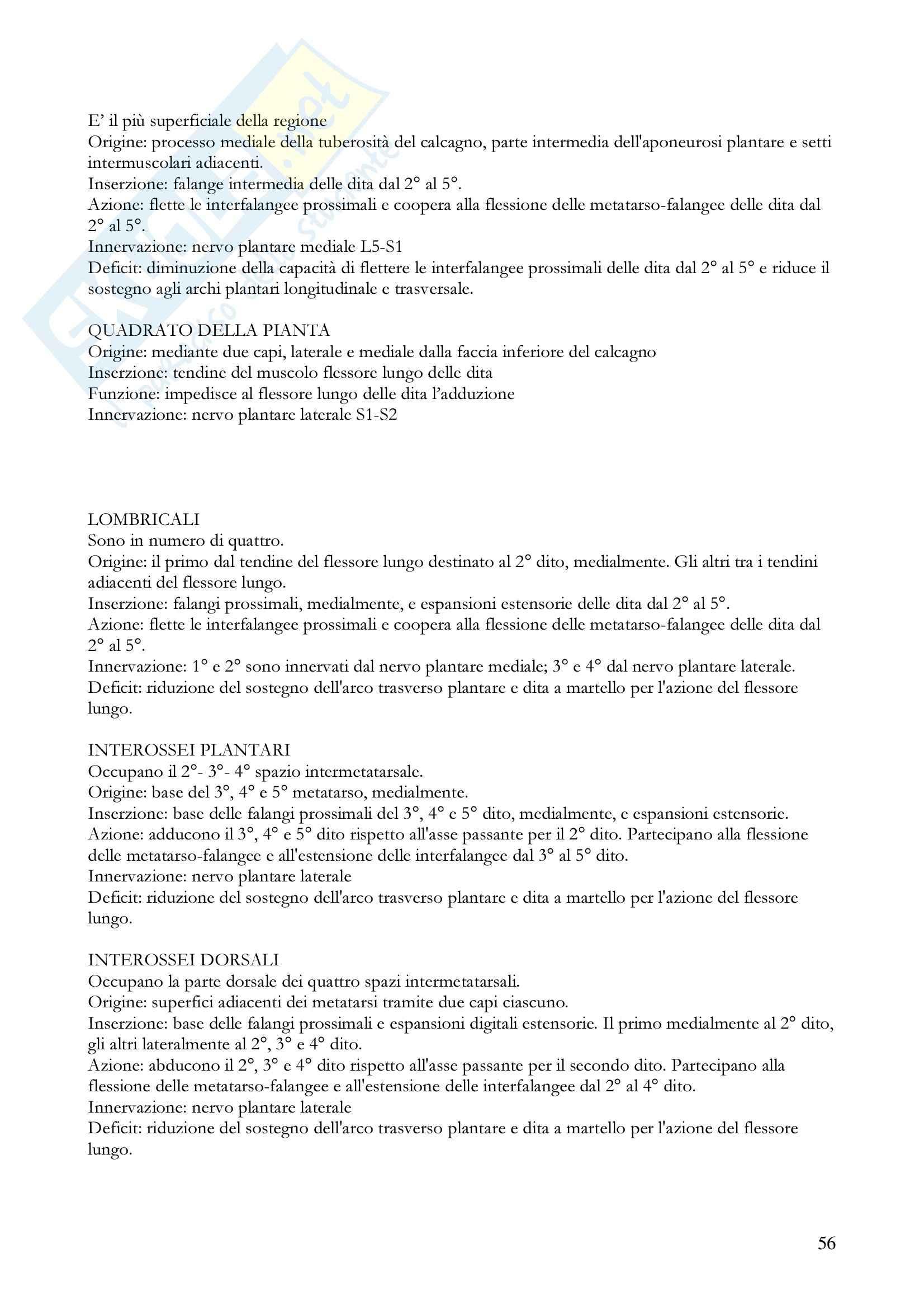 Anatomia umana - apparato locomotore Pag. 56