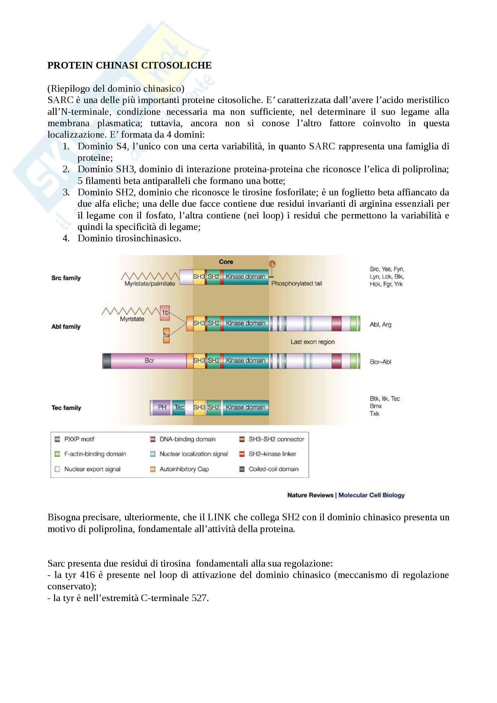 Le protein-chinasi citosoliche