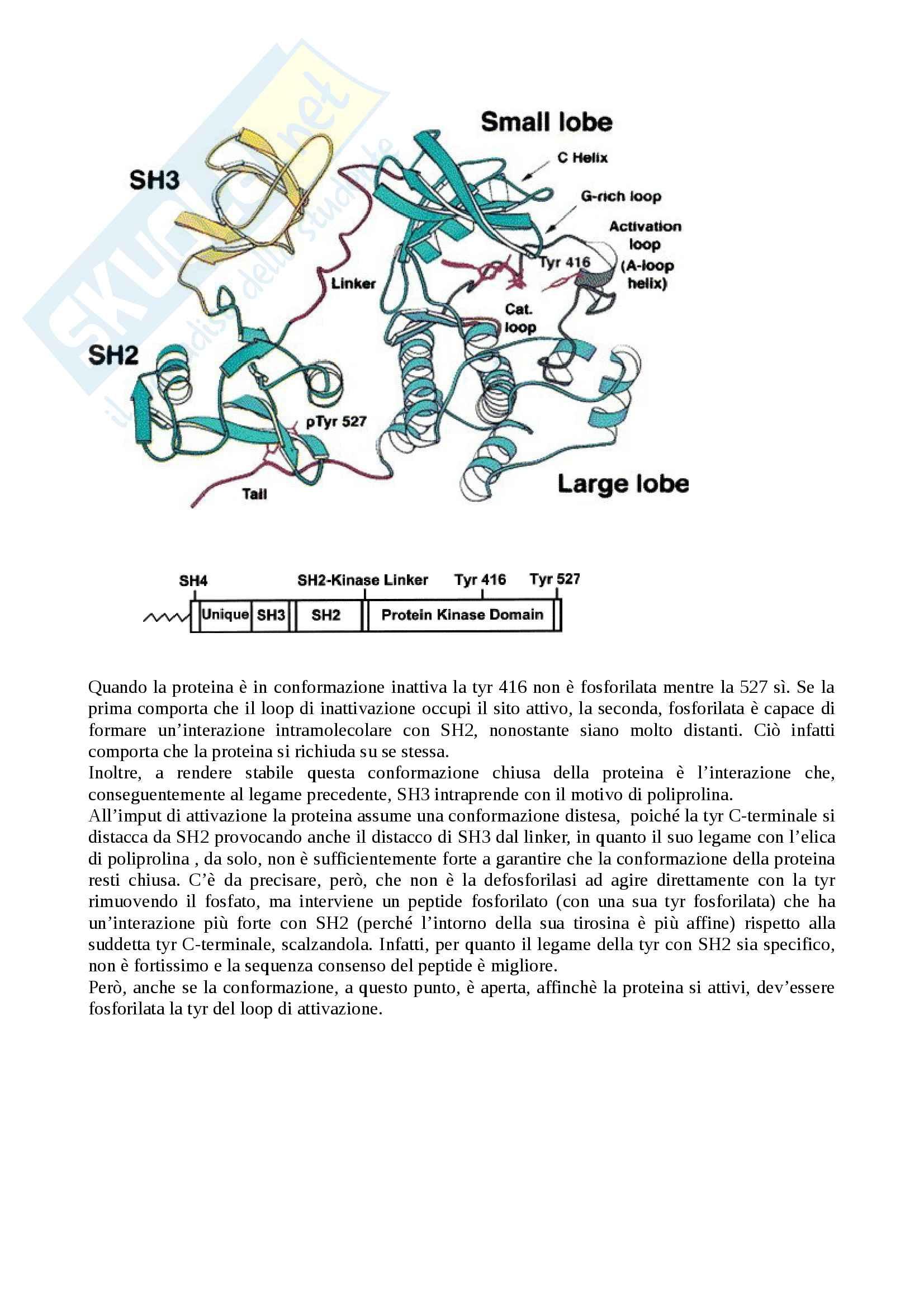 Le protein-chinasi citosoliche Pag. 2