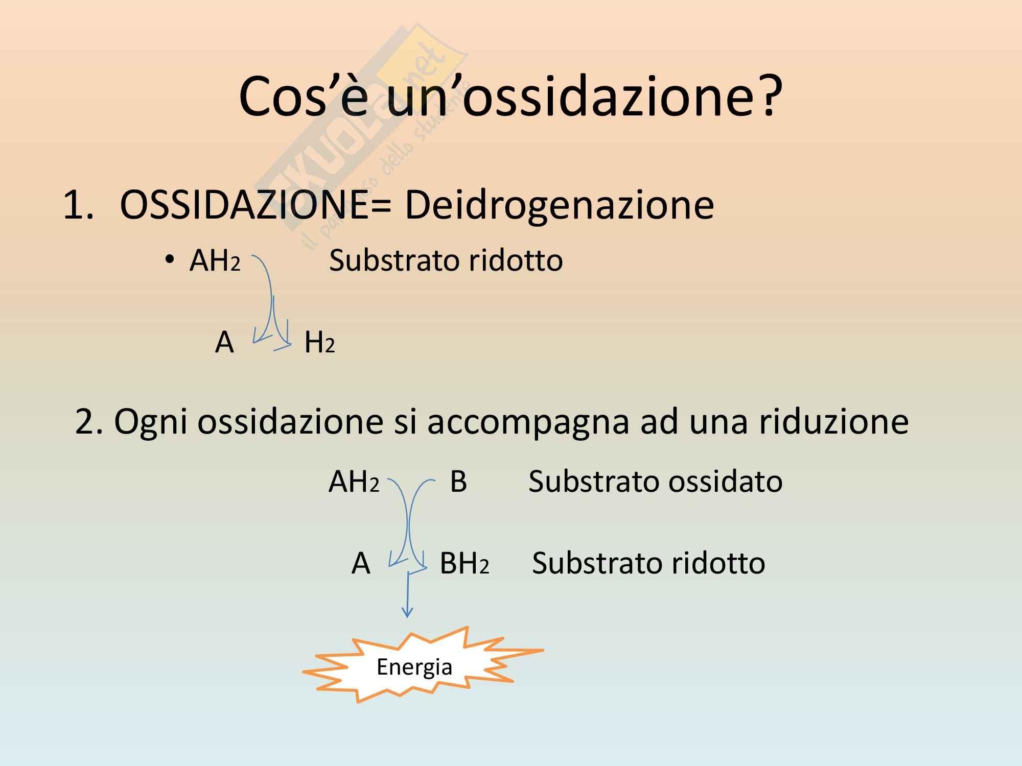 Microbiologia - Metabolismo Pag. 6