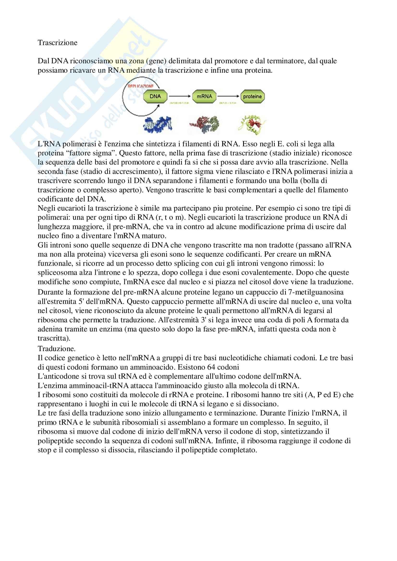 Trascrizione e traduzione, Biologia cellulare ed elementi di genetica