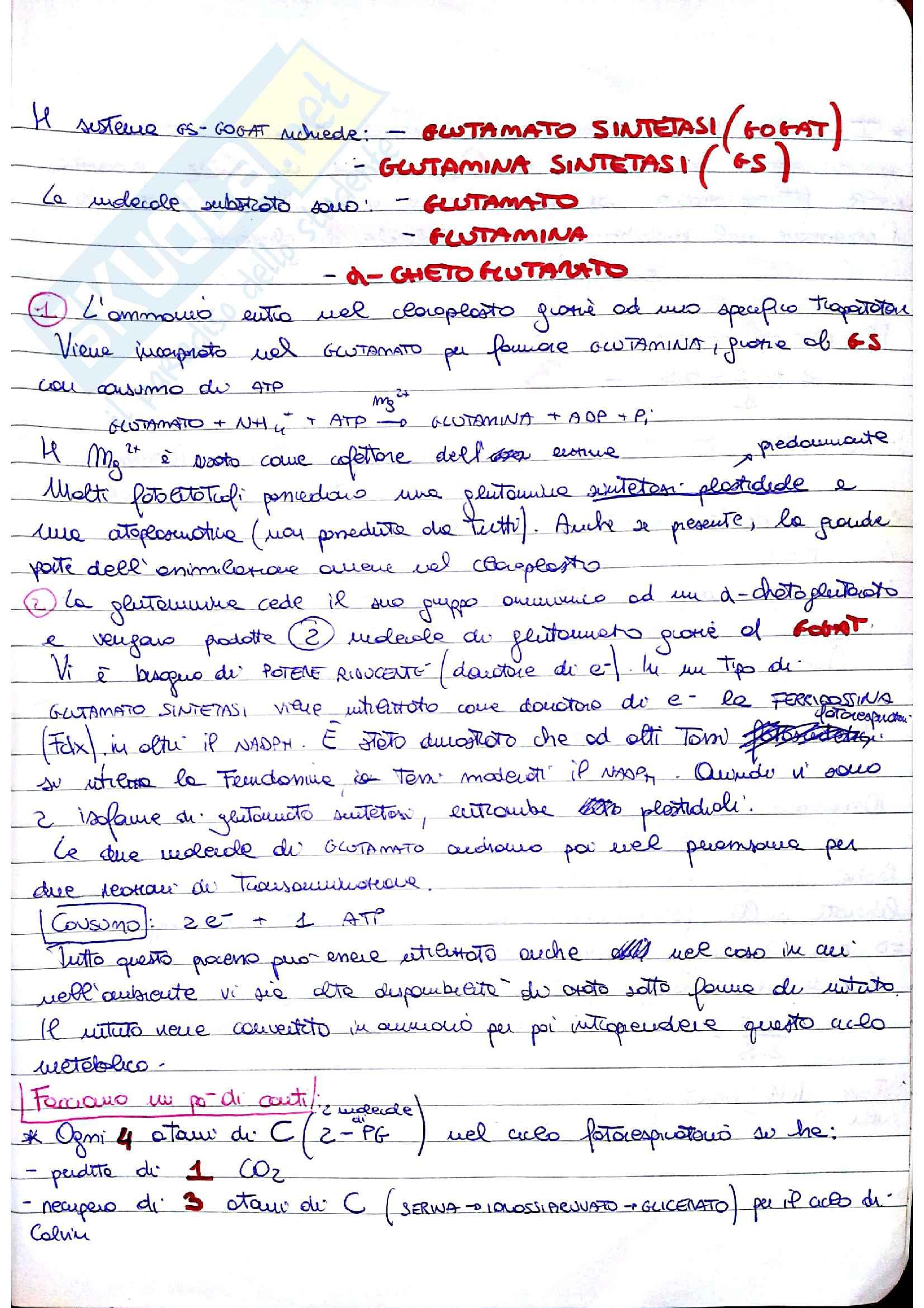 """Riassunto esame fisiologia vegetale, prof. Giordano Mario, libro consigliato Fisiologia vegetale, Taiz, Weiber: - """"La Fotorespirazione"""" Pag. 6"""