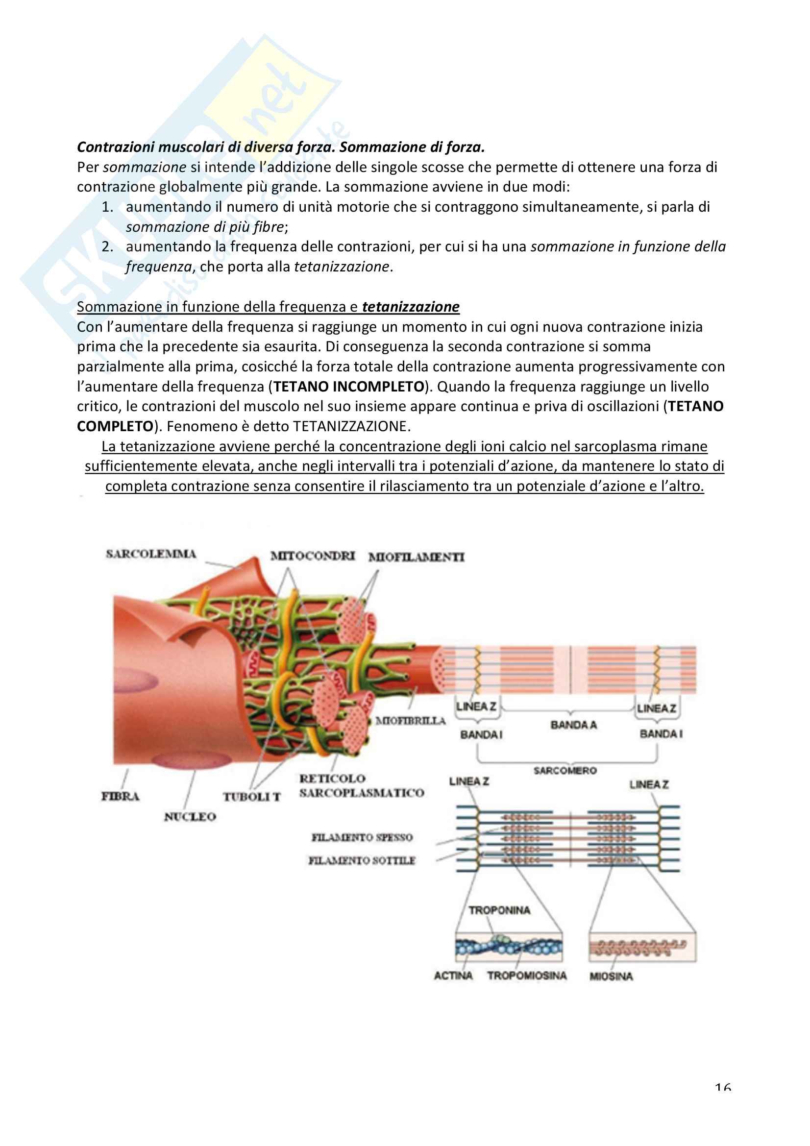 Fisiologia I Pag. 16