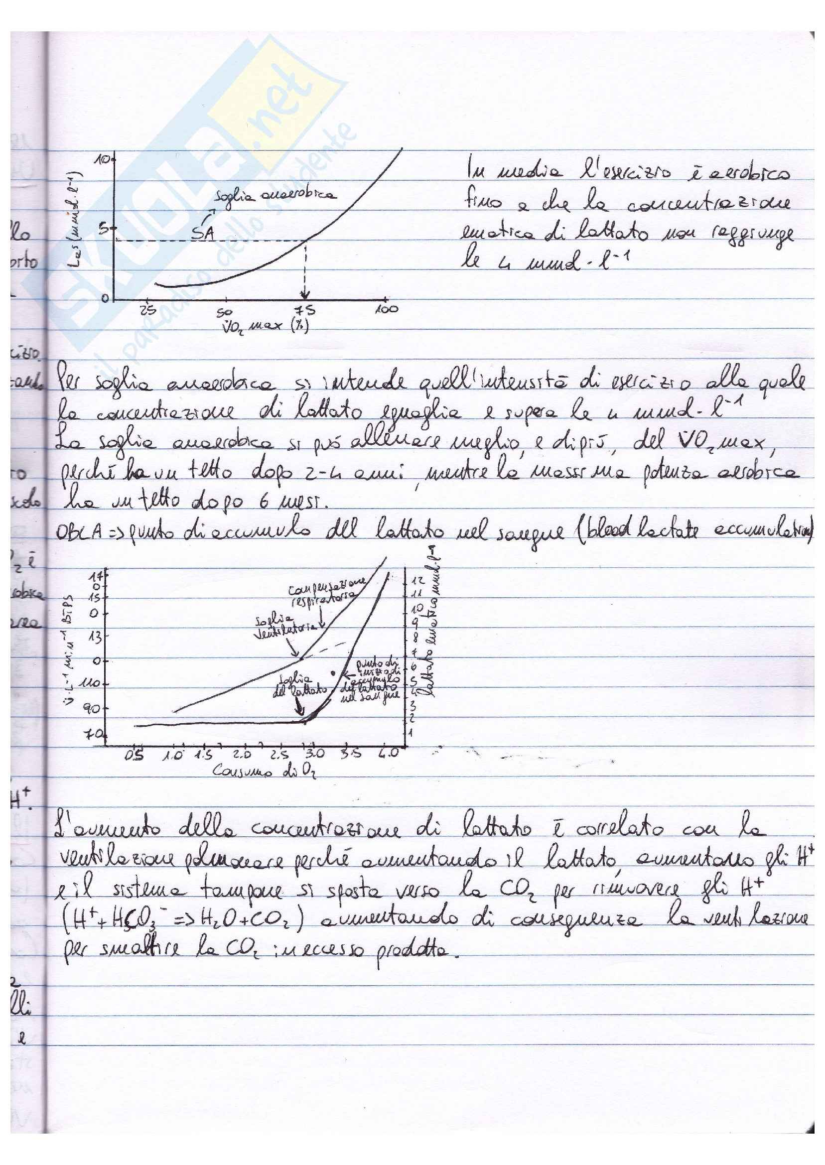 Riassunto esame Fisiologia, prof. Macaluso, libro Fisiologia, Vander, Costill: parte III Pag. 11