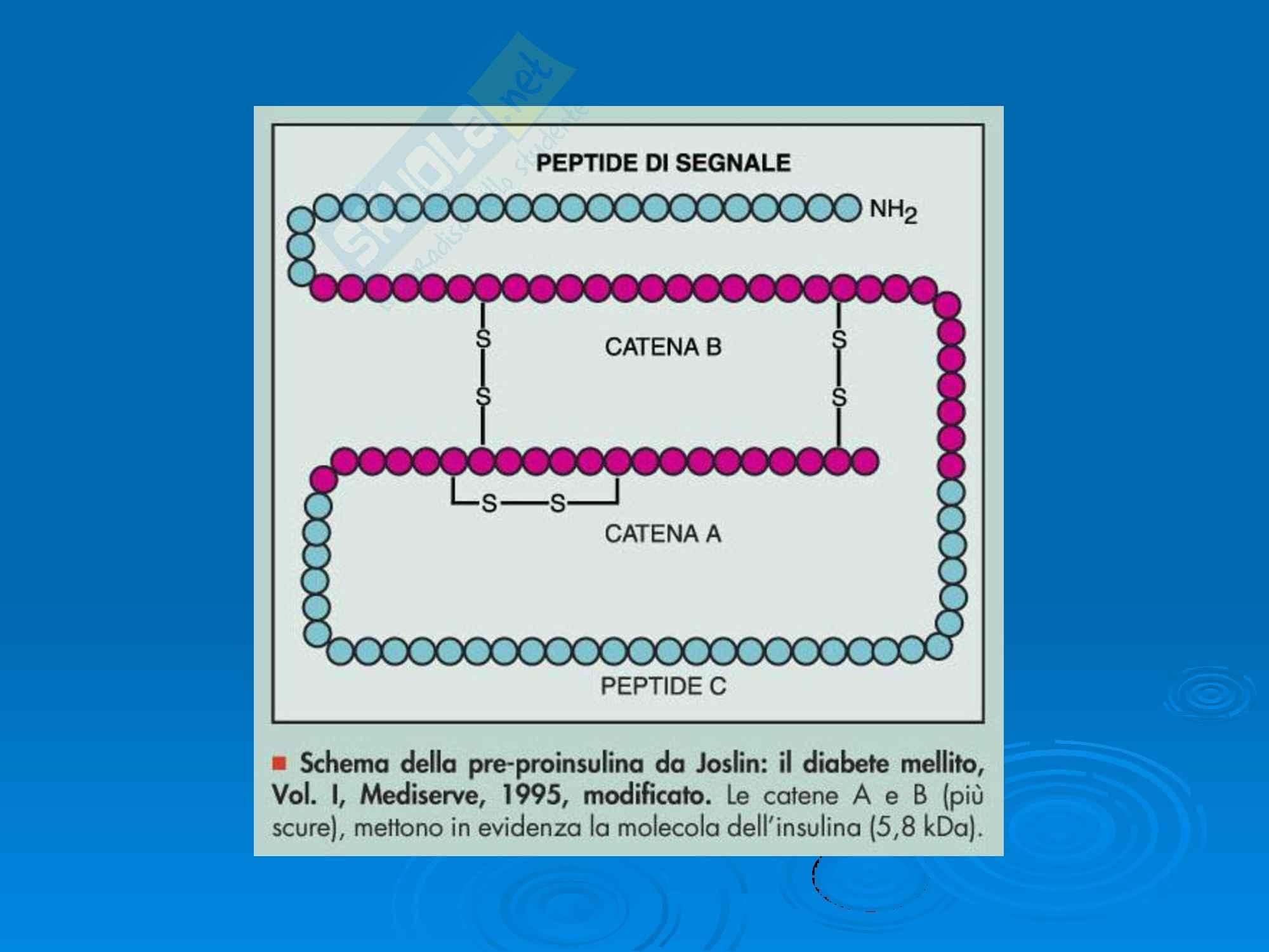 Fisiopatologia - Diabete Mellito Pag. 2