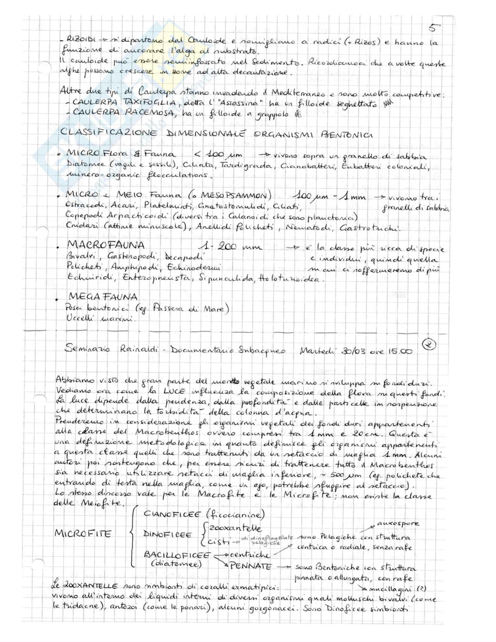 Ecologia del Benthos - Appunti Pag. 6