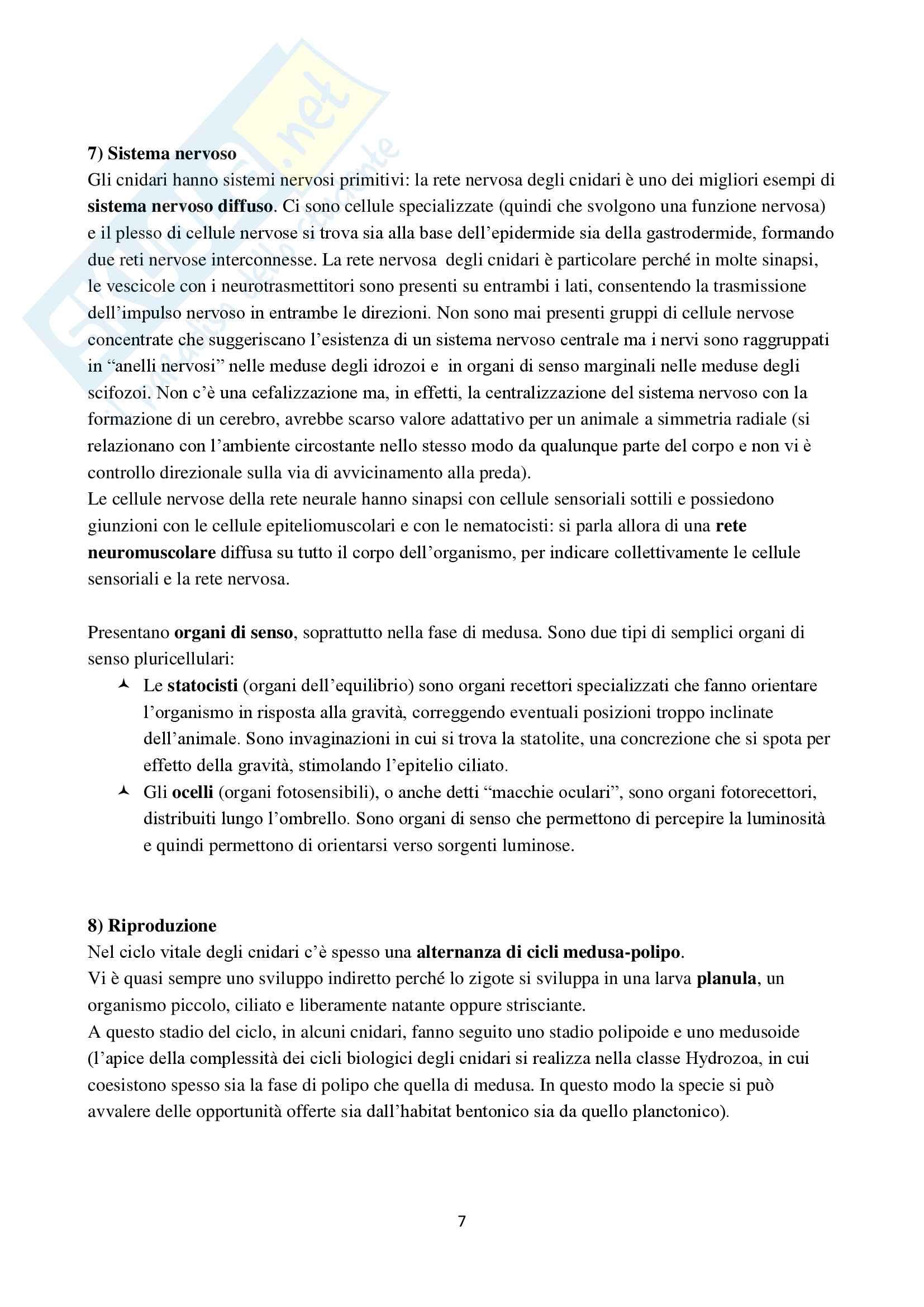 Appunti di Zoologia per l'esame del corso di laurea triennale in Scienze Biologiche (Università Milano Bicocca) Pag. 41