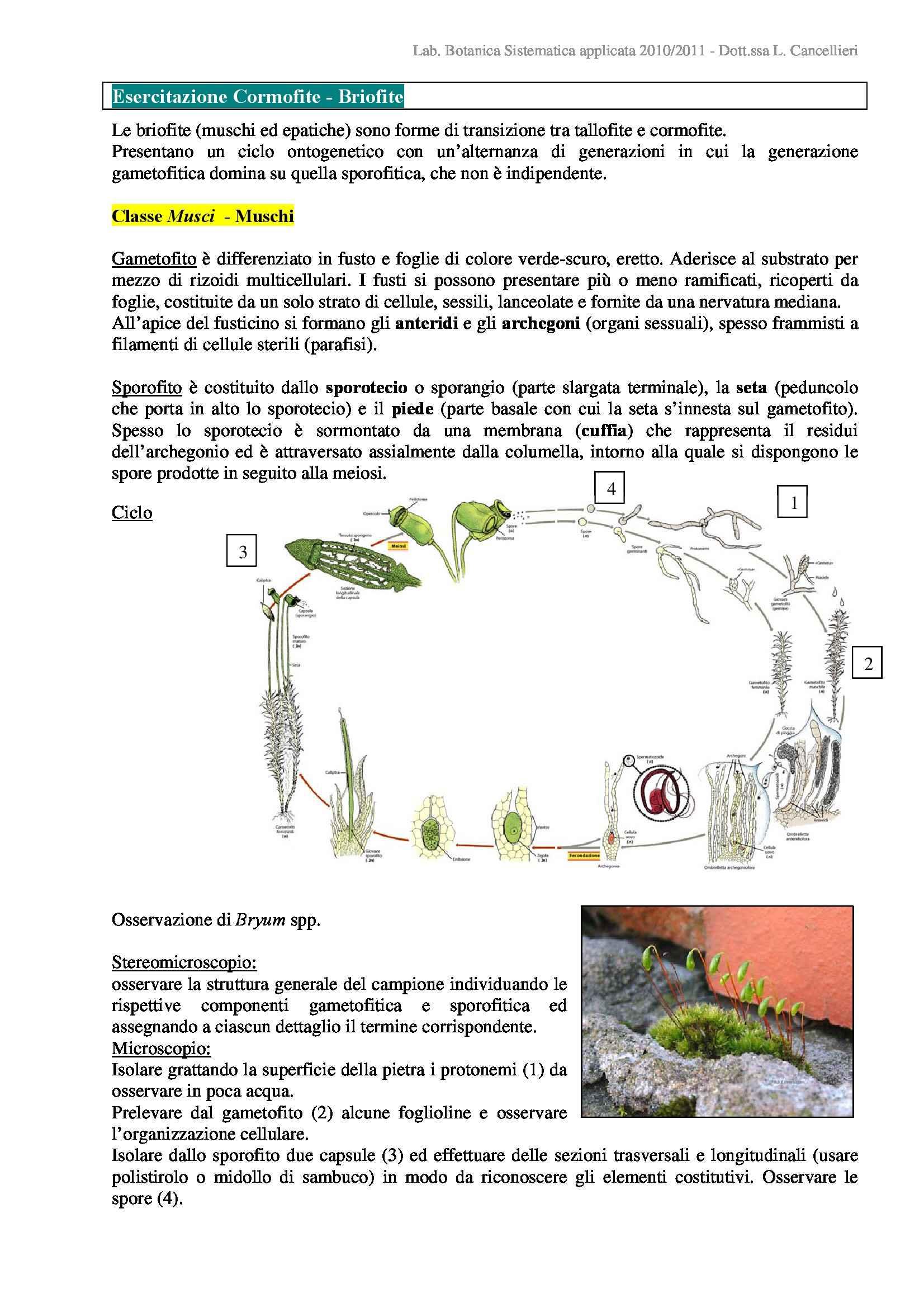 Briofite, Cormofite e Licofite