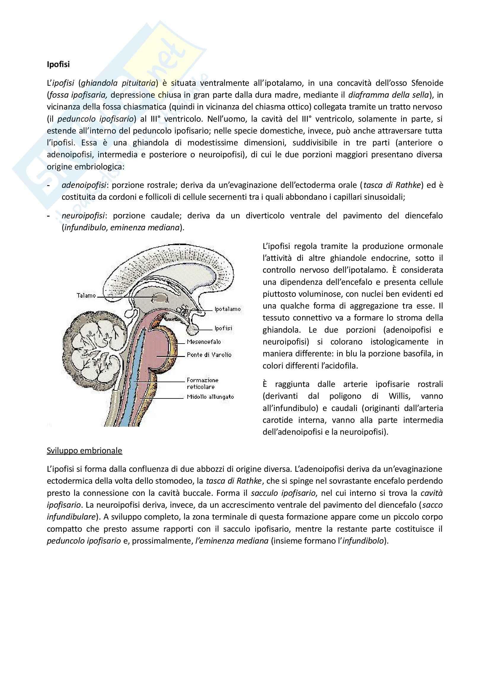 Sistema Endocrino, Anatomia comparata Pag. 2