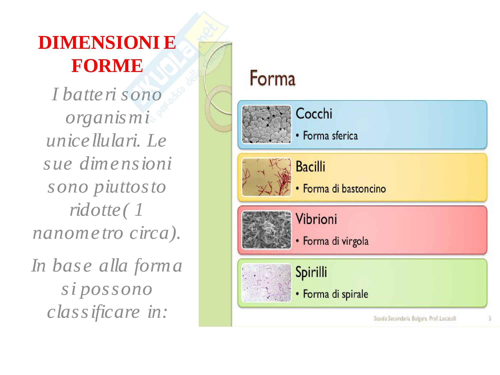 appunto G. Blandino Microbiolologia generale e applicata