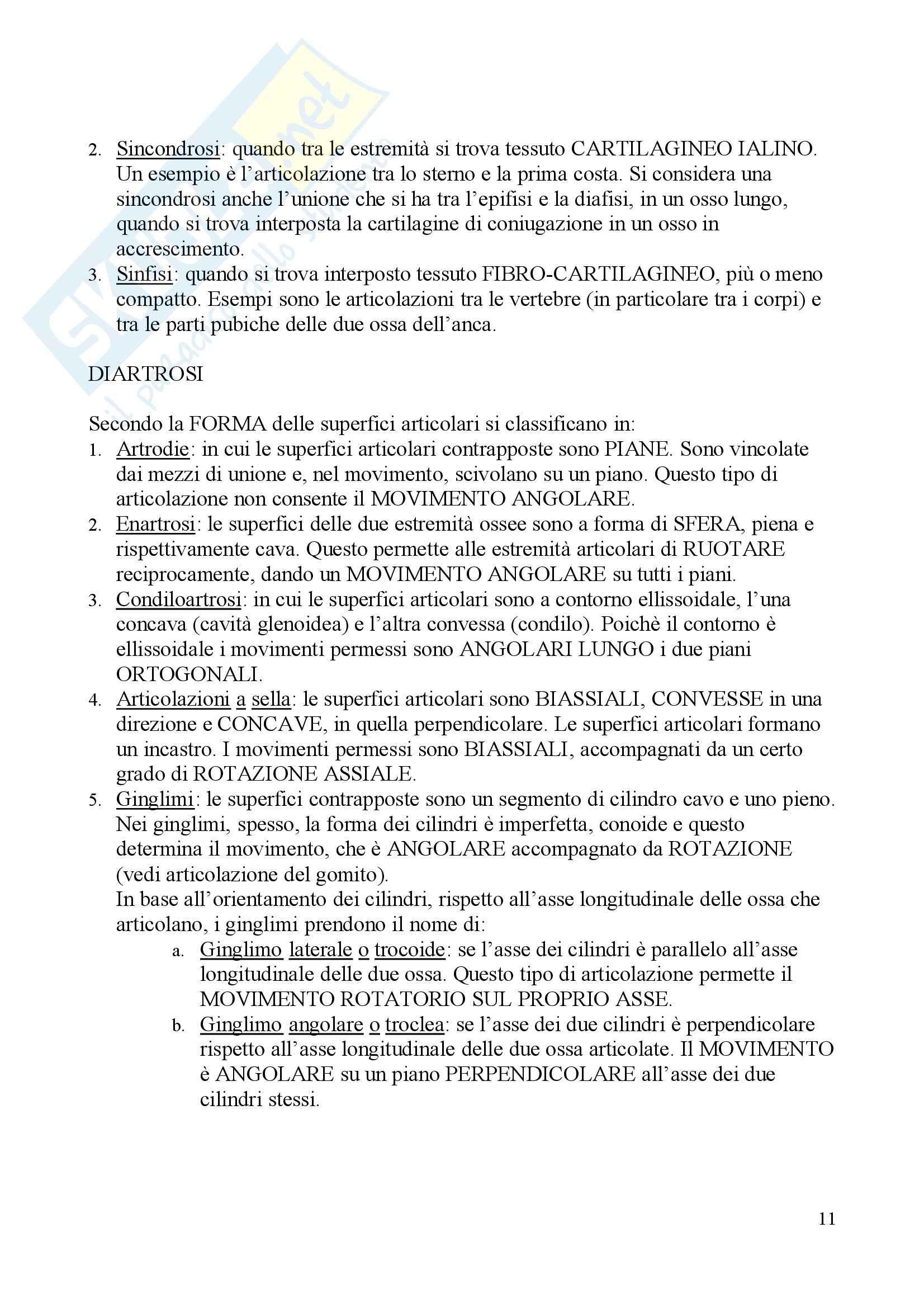 Anatomia I – Apparato locomotore Pag. 11