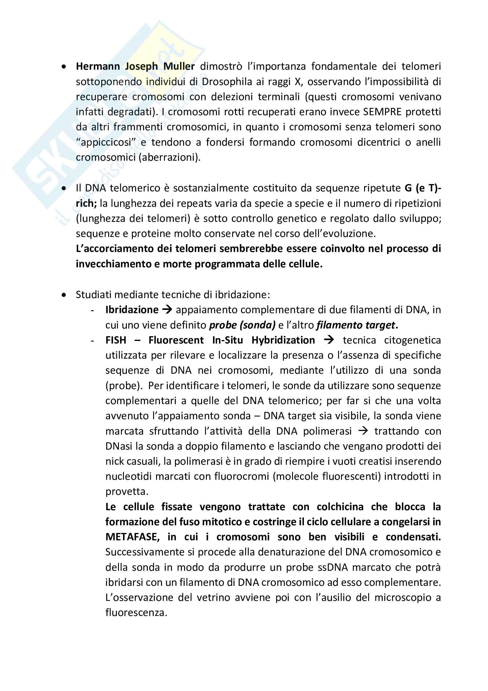 Ingegneria genetica - dal genoma alle moderne tecniche di manipolazione Pag. 26