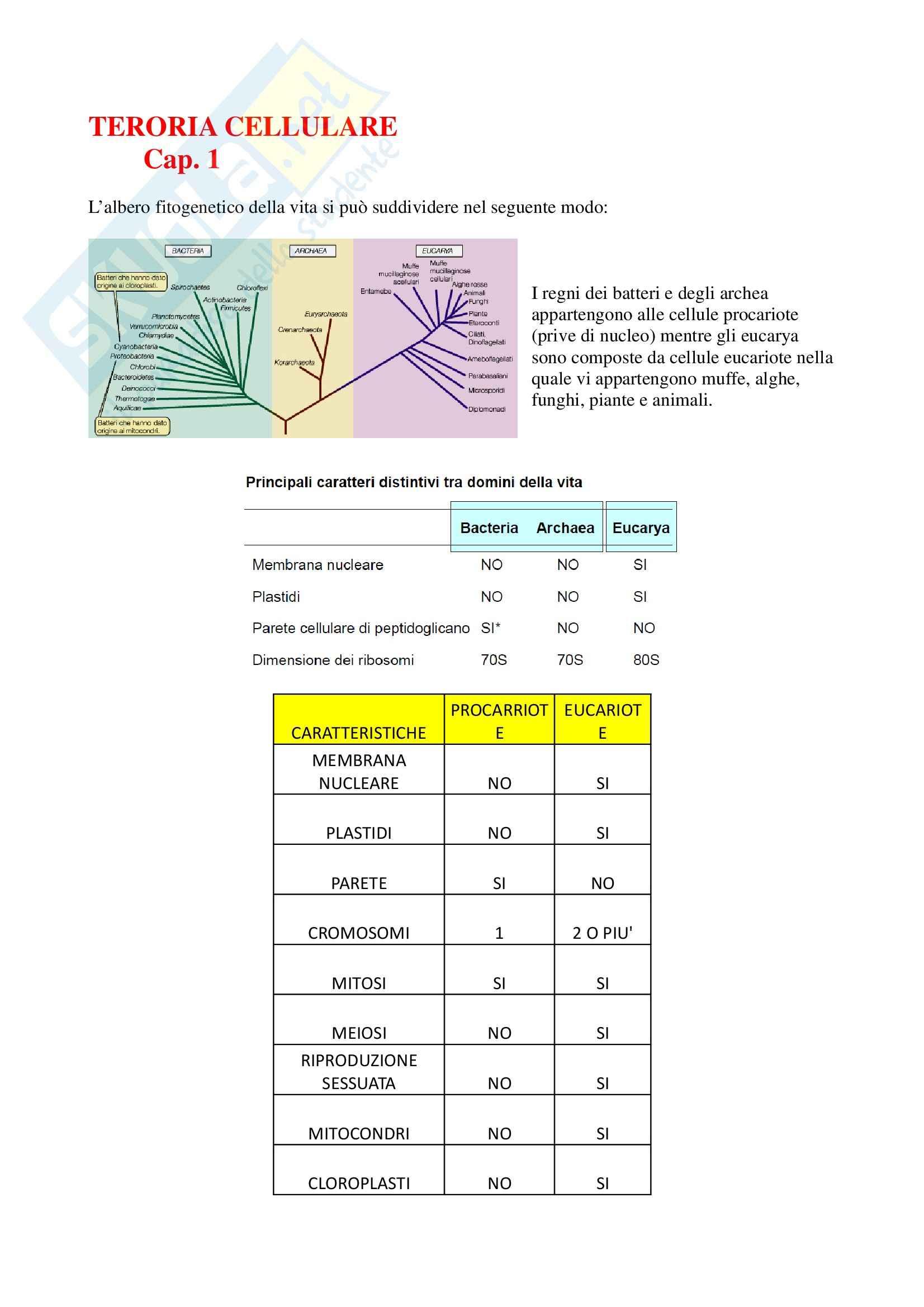 Riassunto esame Biologia dei microrganismi, prof. Mora