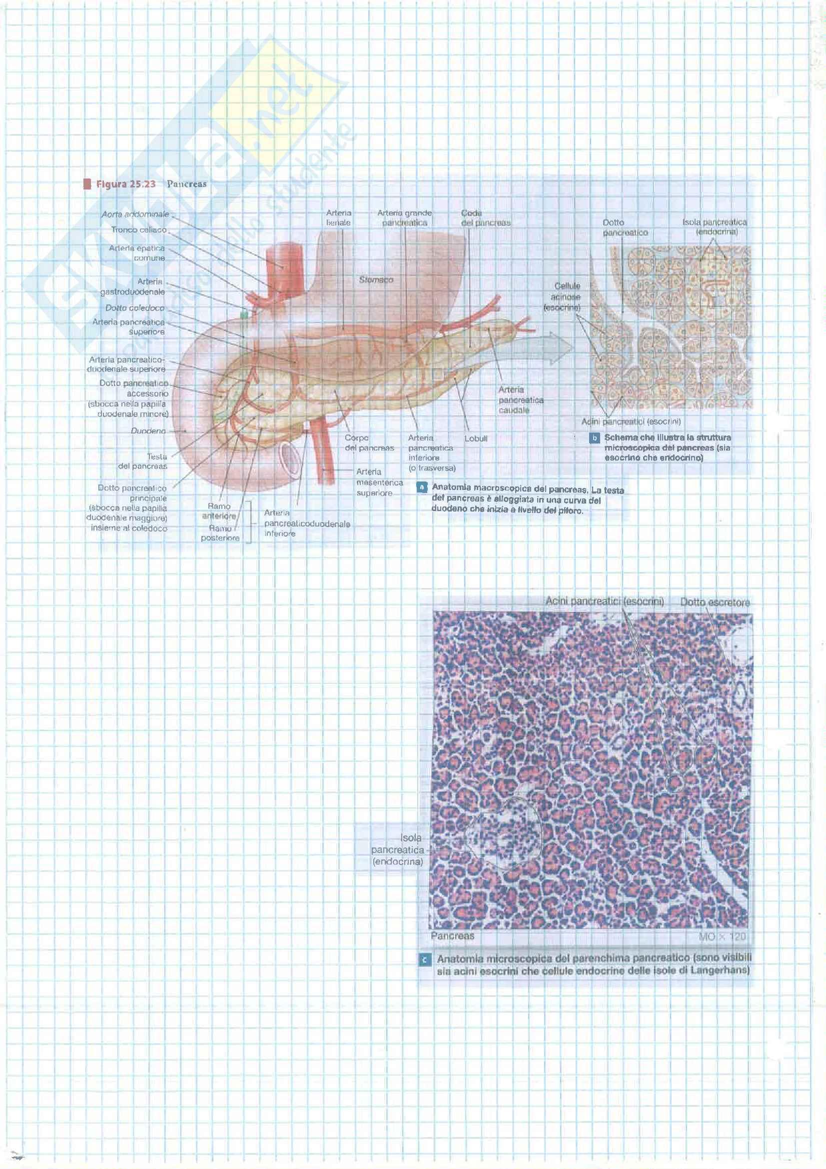 4 Esonero (Apparato Digerente,Urinario, Sistema Nervoso) Pag. 16