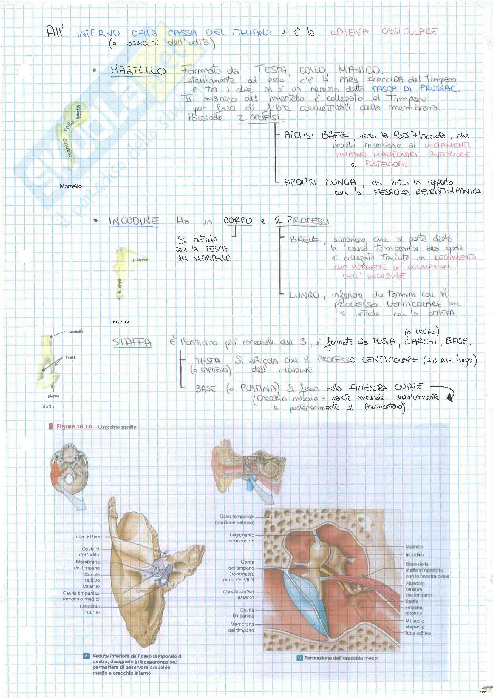 4 Esonero (Apparato Digerente,Urinario, Sistema Nervoso) Pag. 71