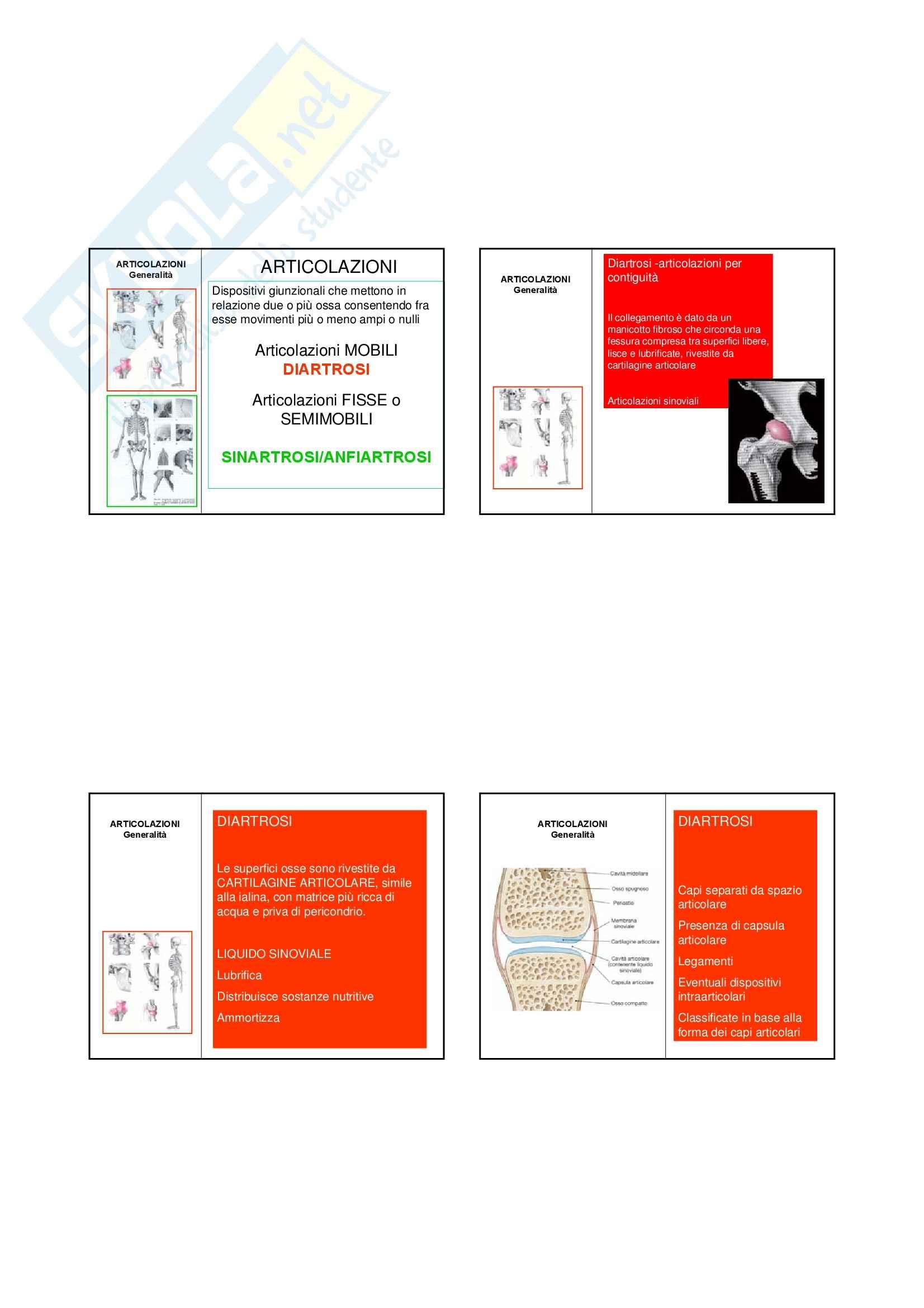 Anatomia I – Articolazioni – Slides 5 Pag. 1