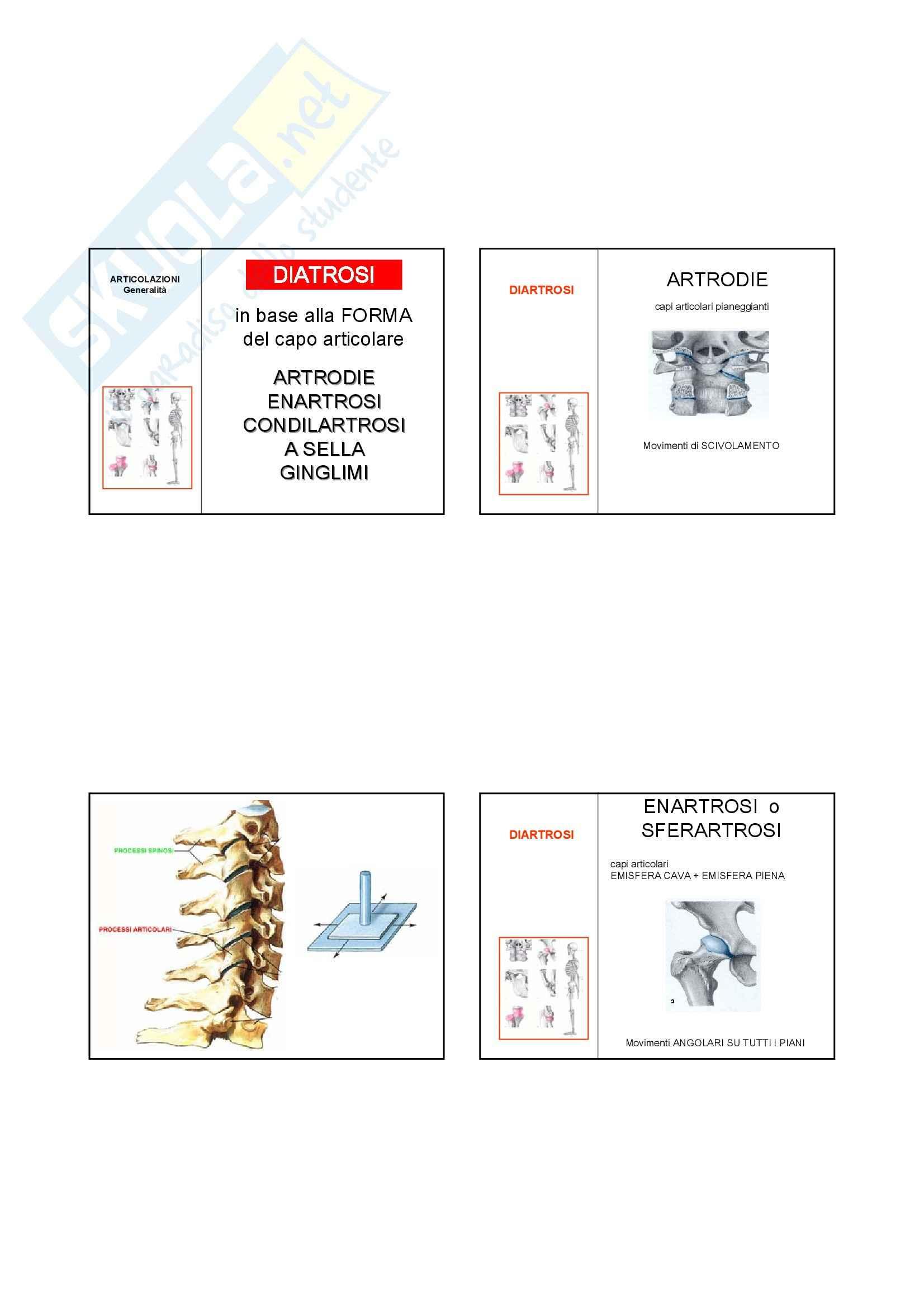 Anatomia I – Articolazioni – Slides 5 Pag. 2