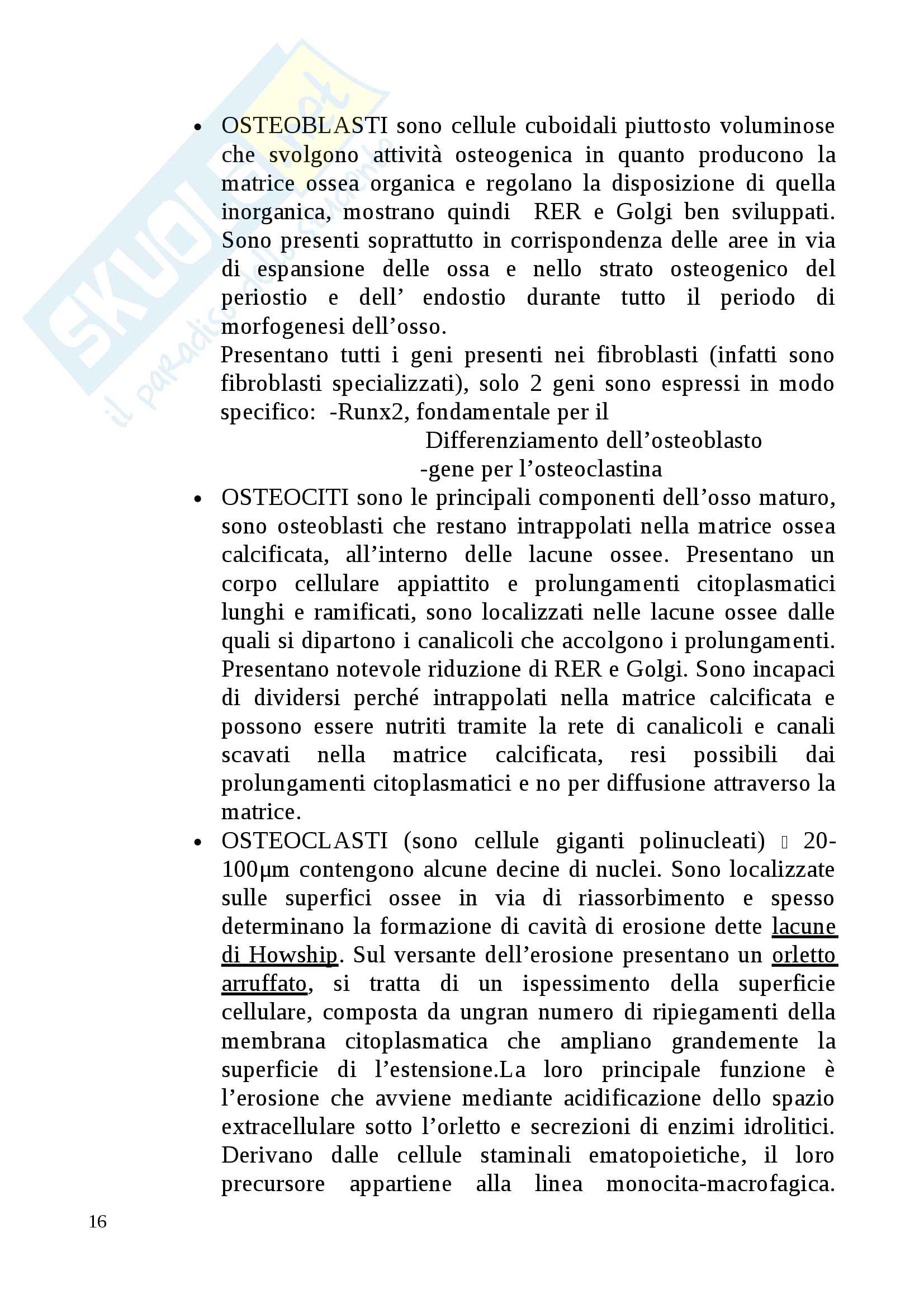 Istologia esame completo Pag. 16