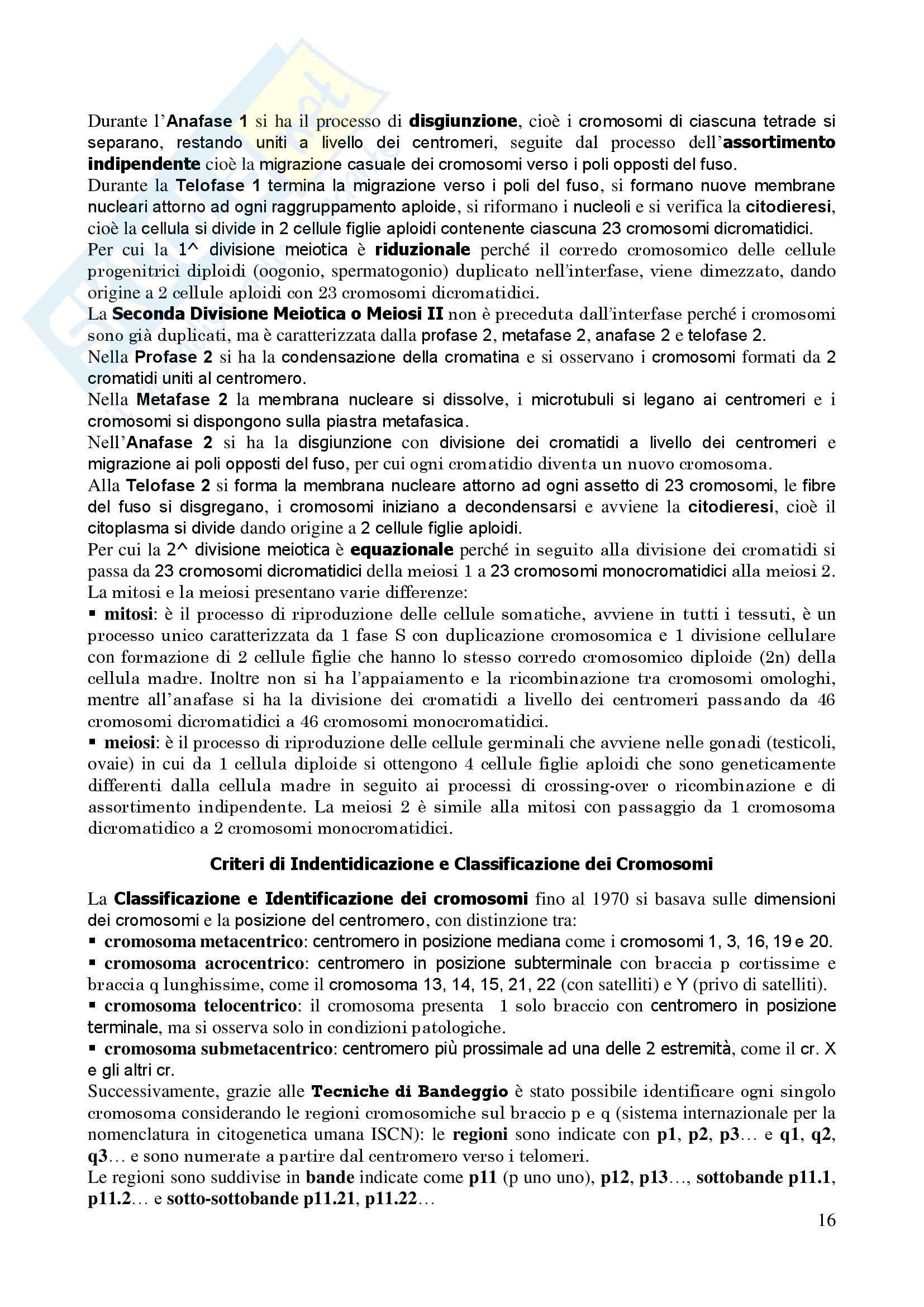 Genetica Umana - Appunti Pag. 16