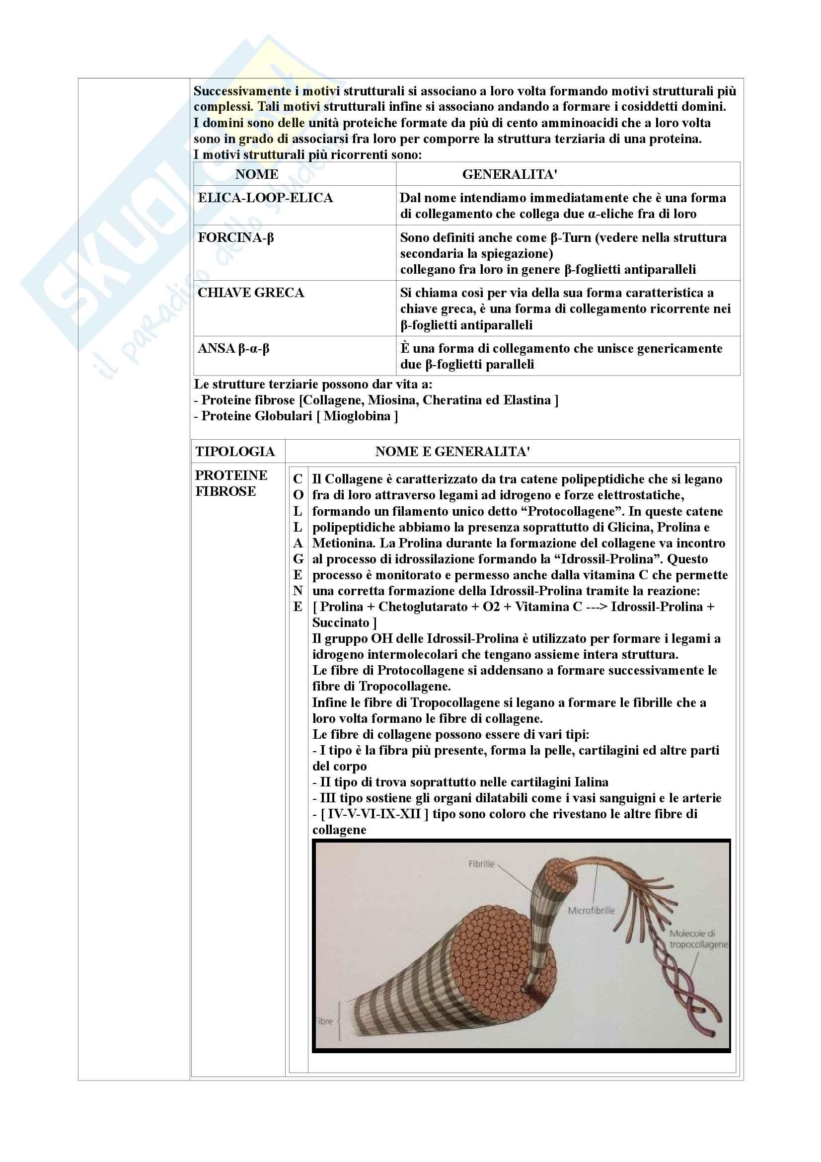 Riassunto di Biochimica degli alimenti Pag. 56