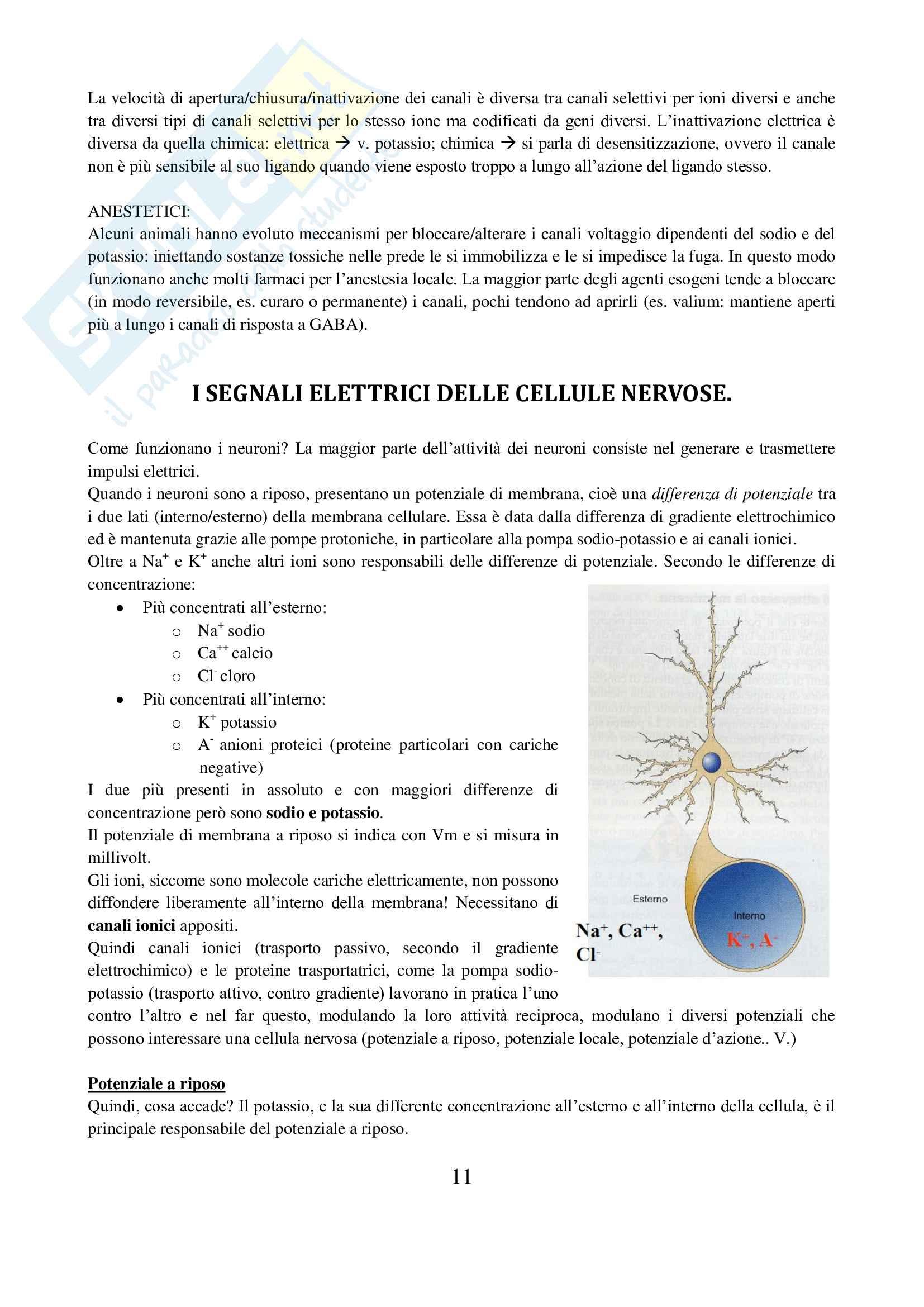 Appunti completi Neuroscienze, prof Sacchetti Pag. 11