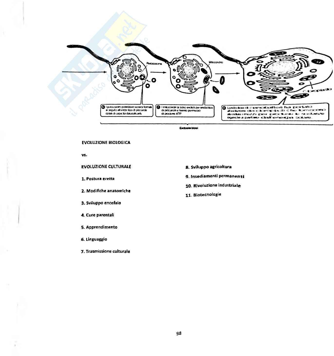 Biologia Animale Pag. 96