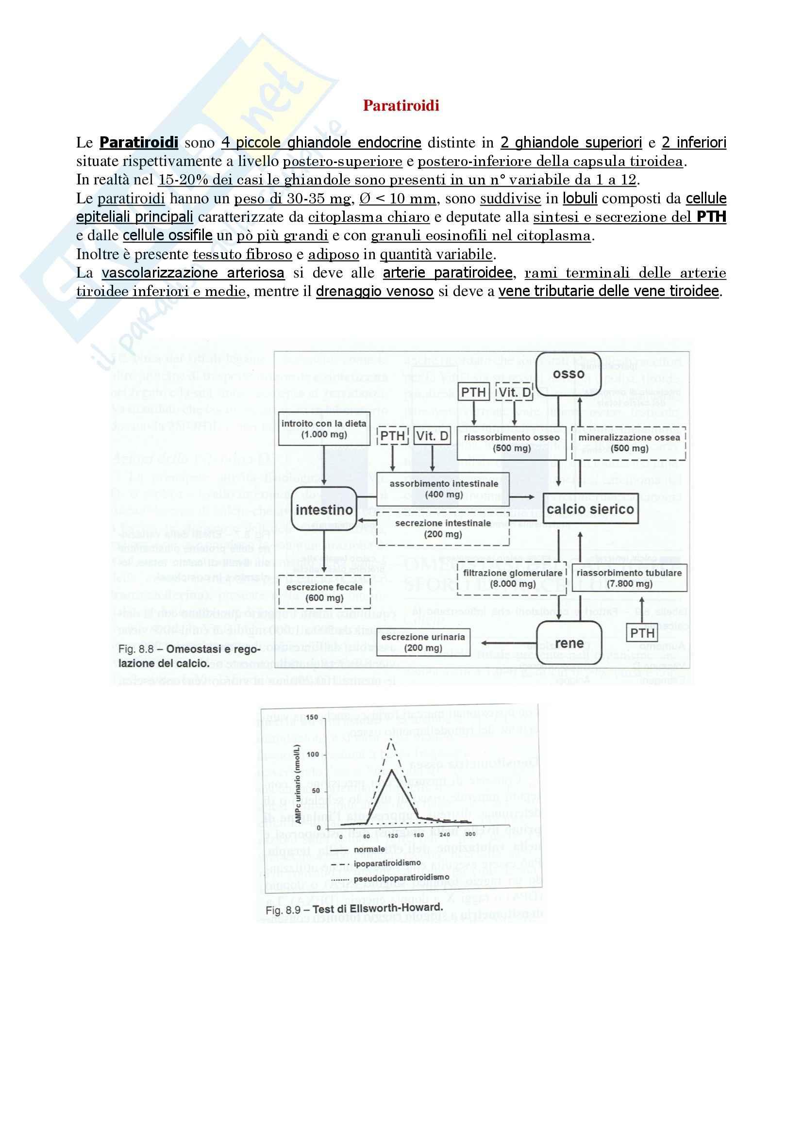 Endocrinologia - ghiandole paratiroidi