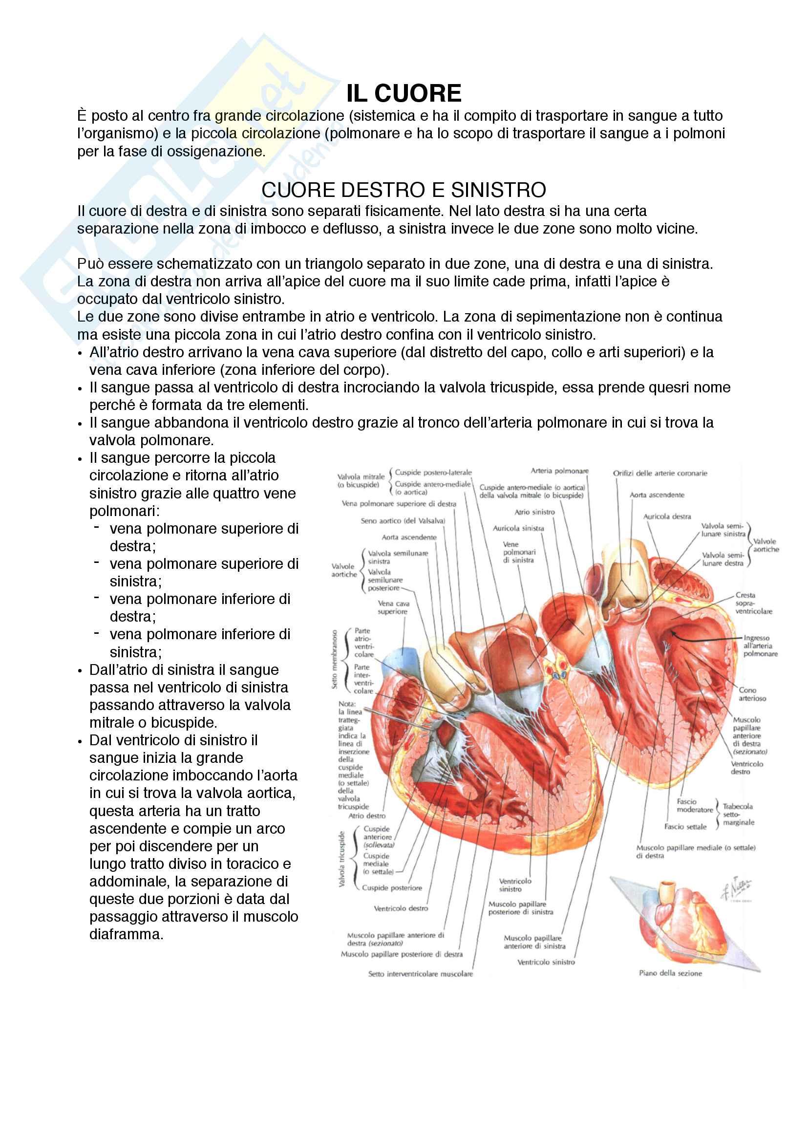 Documento completo per esame AnatomiaI-Cuore, Unipd