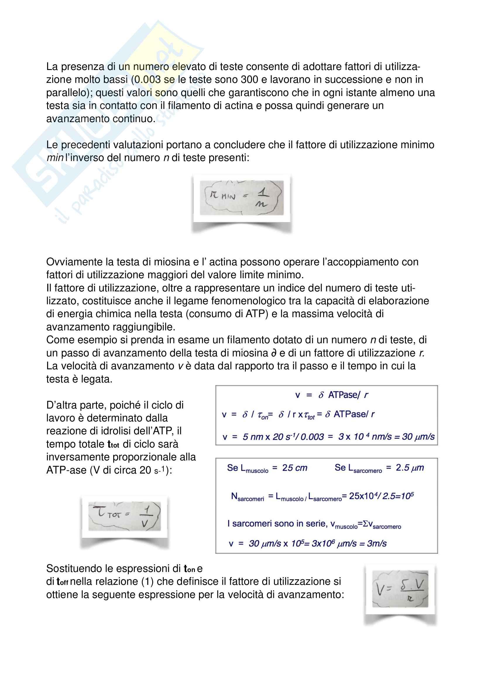 Biomeccanica (Appunti) Pag. 26