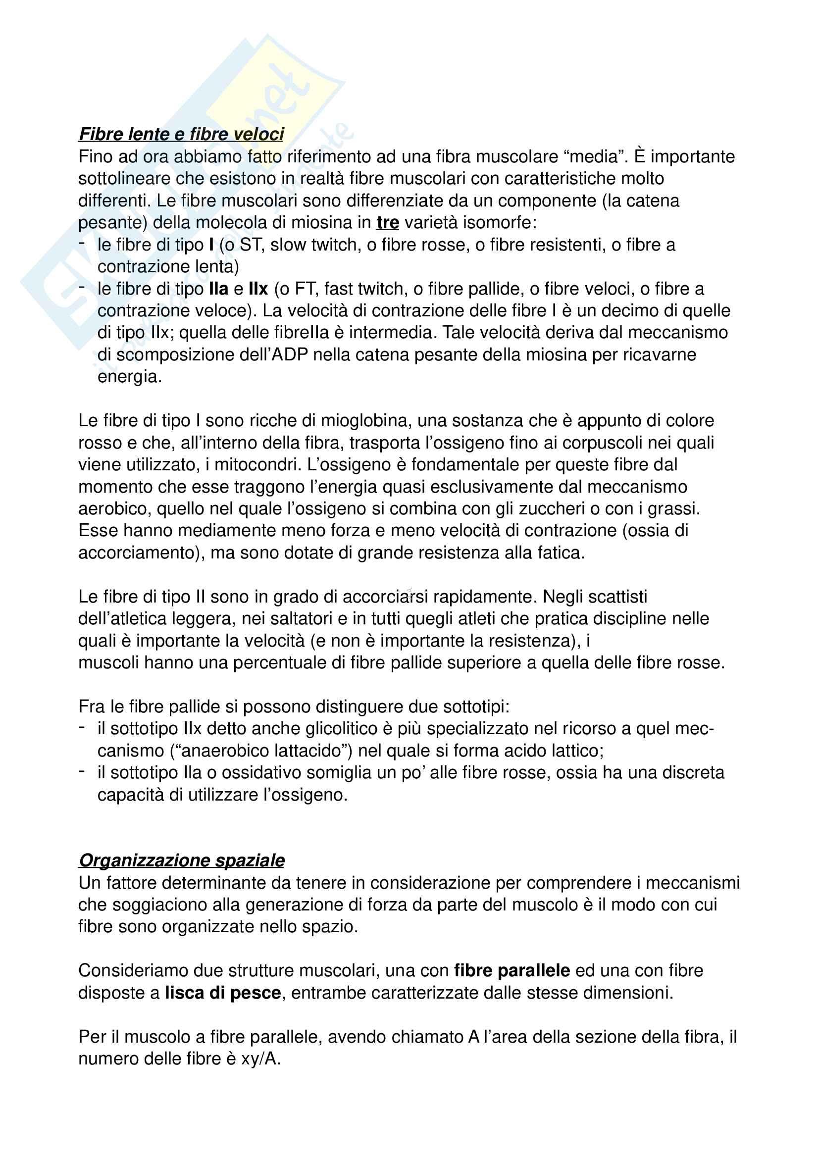 Biomeccanica (Appunti) Pag. 36