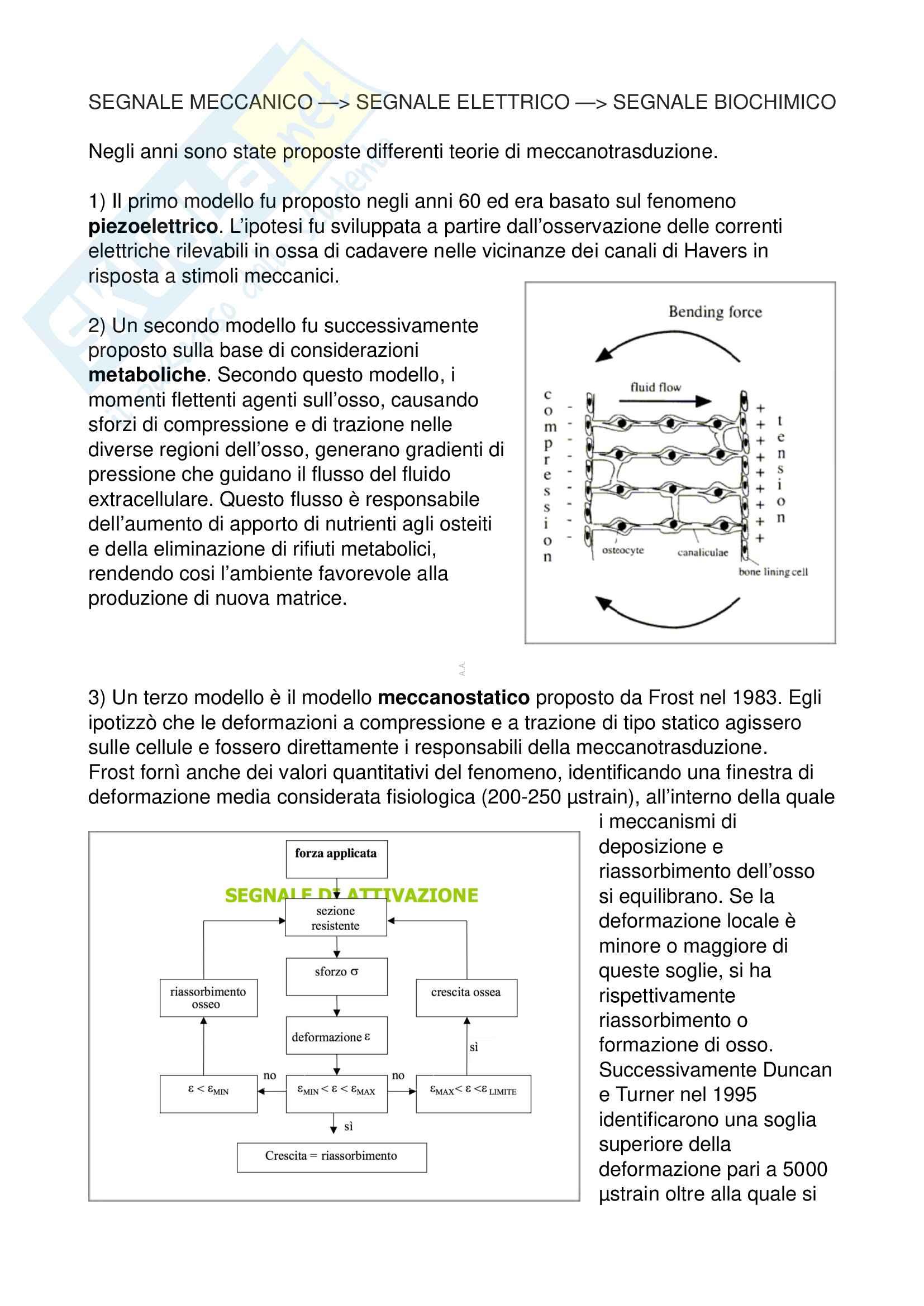 Biomeccanica (Appunti) Pag. 6