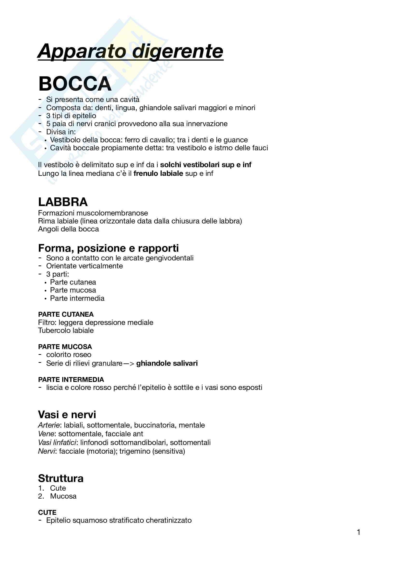 Anatomia Umana - Apparato Digerente
