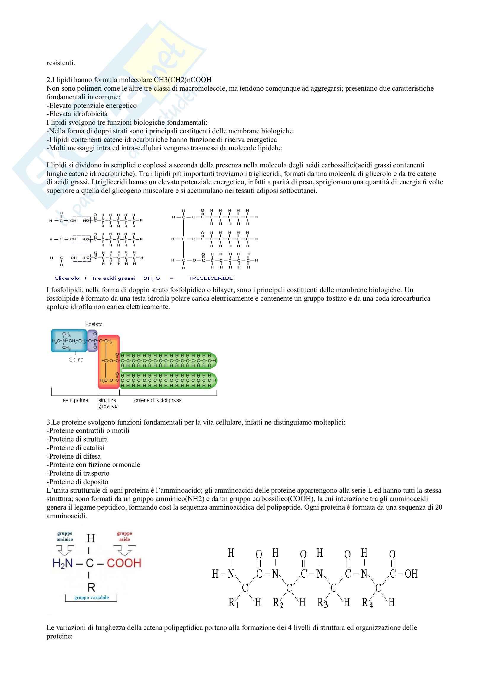 Biologia umana e genetica Pag. 2