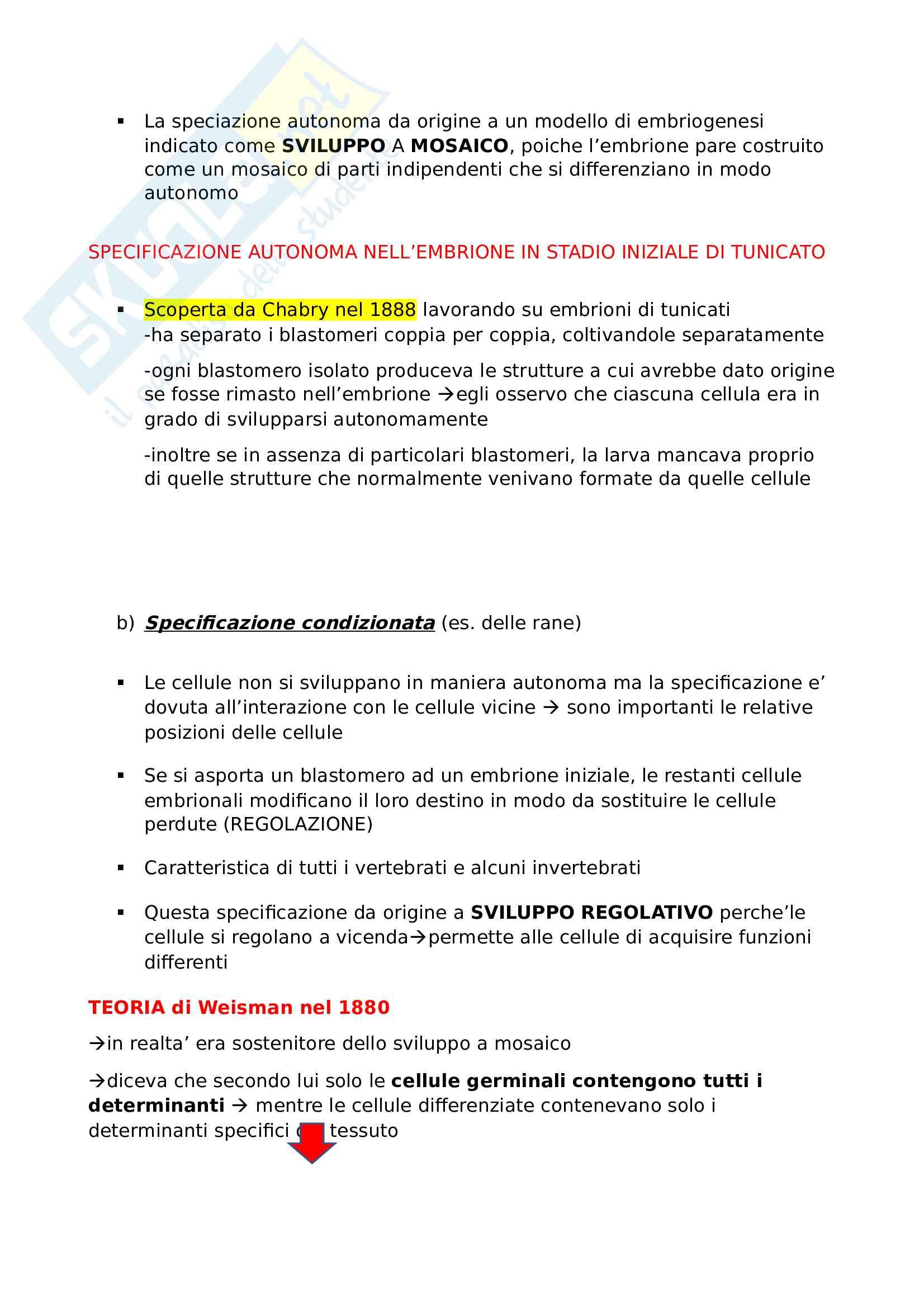Biologia dello sviluppo (segmentazione e gastrulazione) Pag. 11