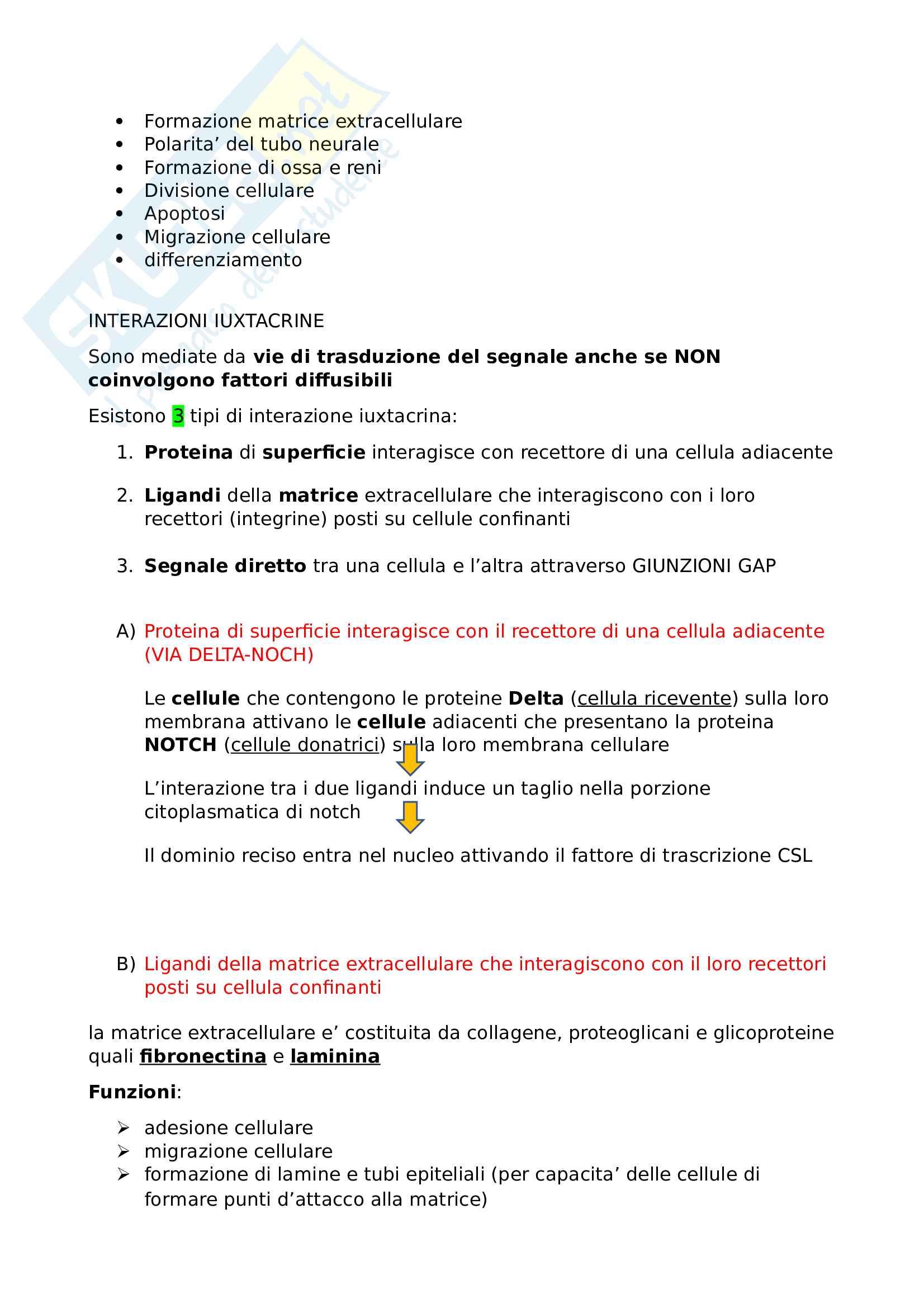 Biologia dello sviluppo (segmentazione e gastrulazione) Pag. 41