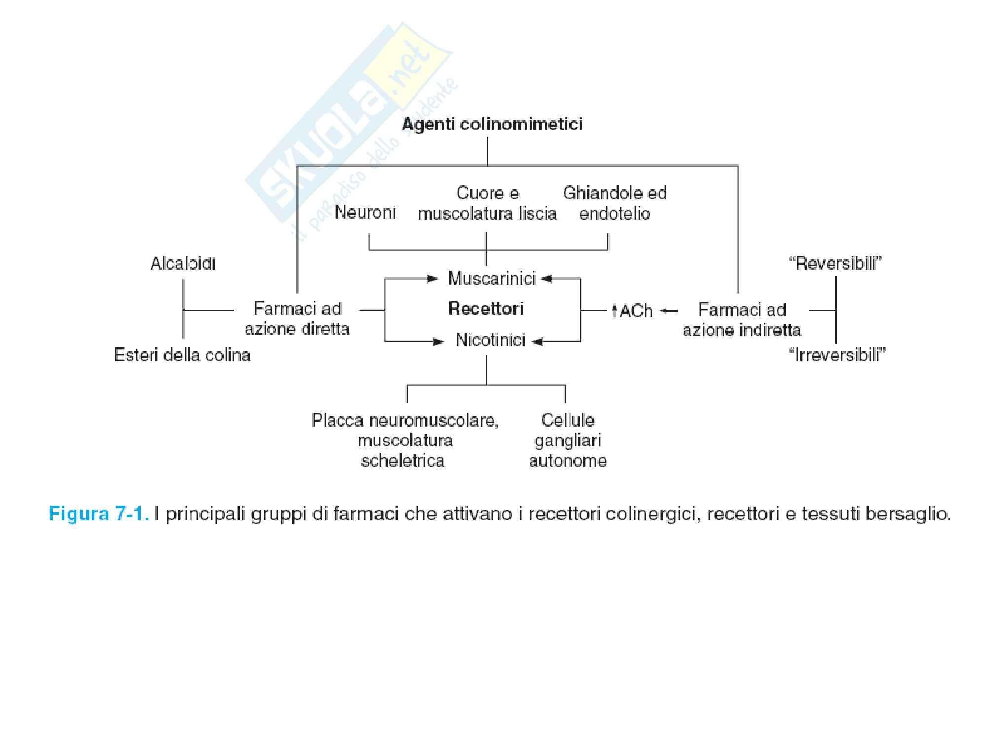 Slide su Farmaci stimolanti e bloccanti irecettori colinergici Pag. 6
