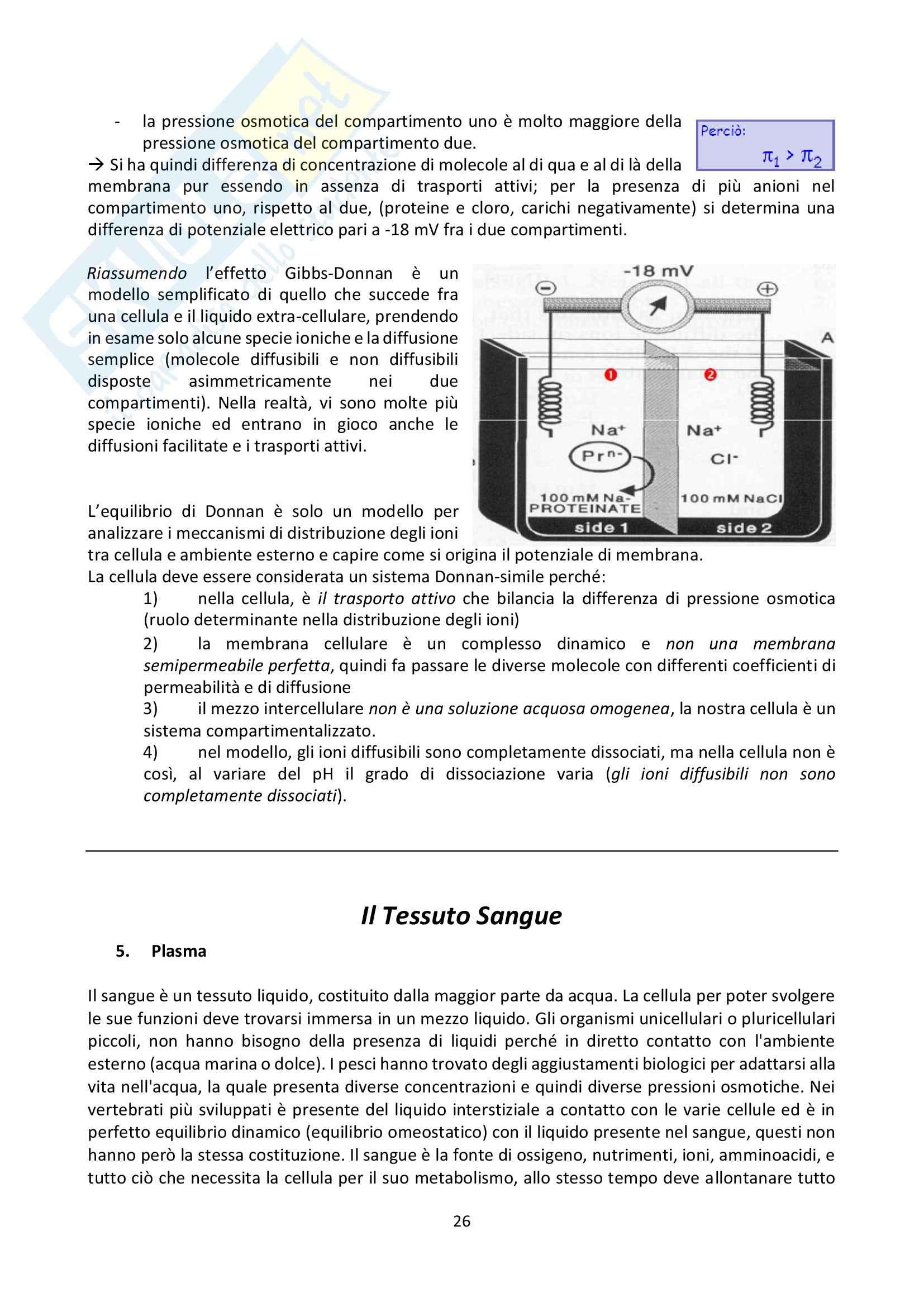 Lezioni, Fisiologia generale Pag. 26