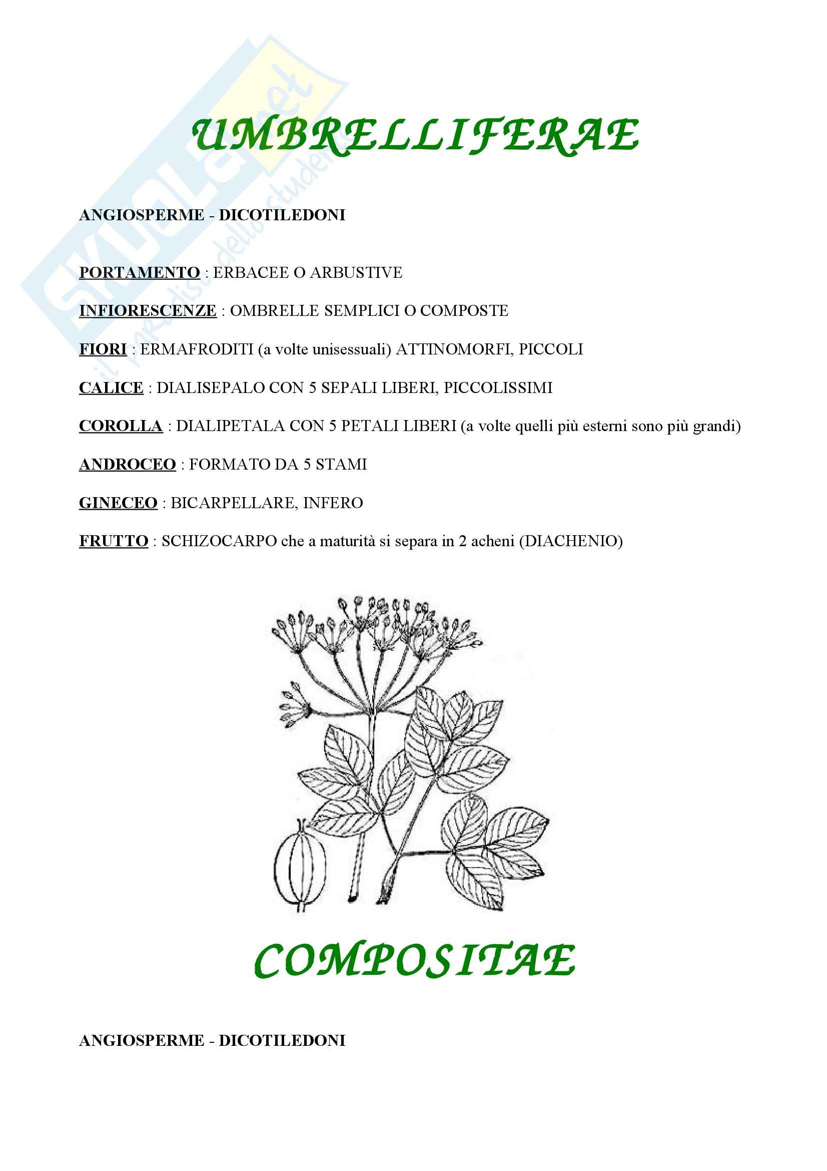 Botanica - le angiosperme
